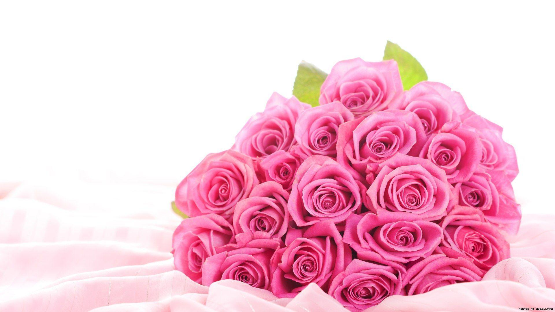 Wallpaper Hd Rose Flowers Images For Mobile Bestholidaydeals Co