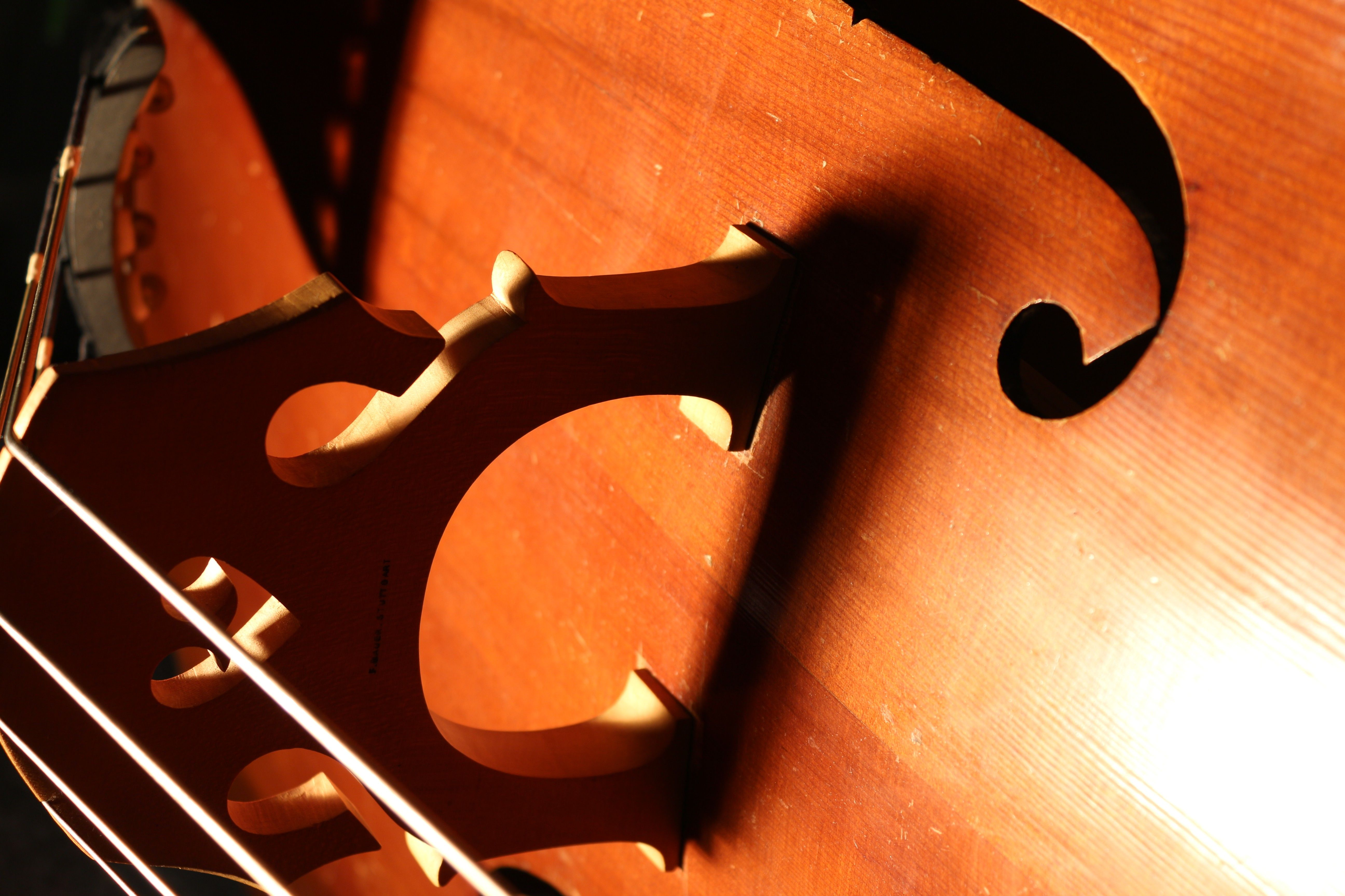 brown, bass, Instruments, double bass, canon eos 650d, String Bass