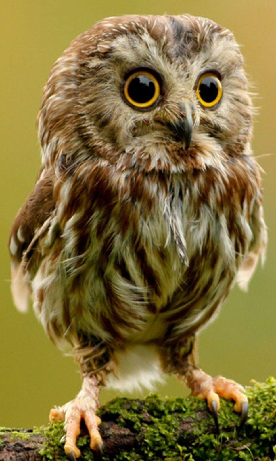 Cute Owl Wallpapers For Android ...