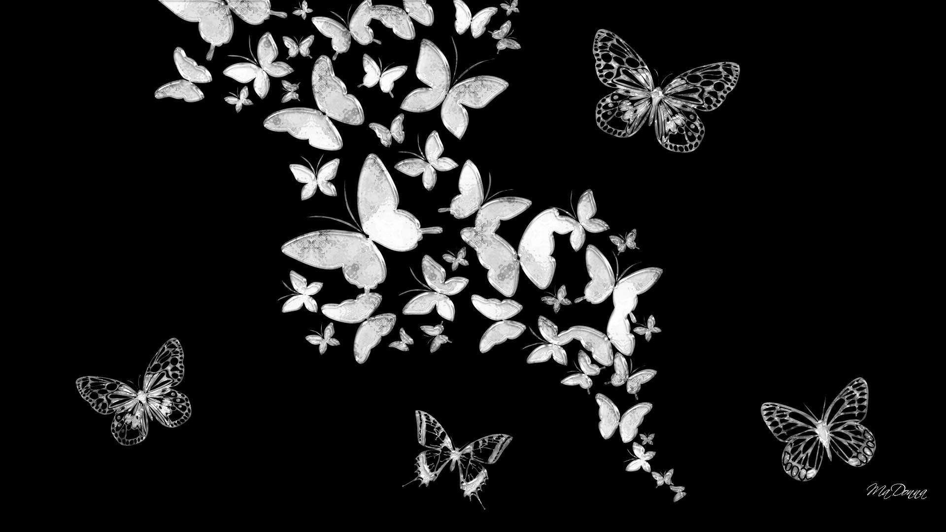 Black And Pink Butterflies Wallpapers Wallpaper Cave