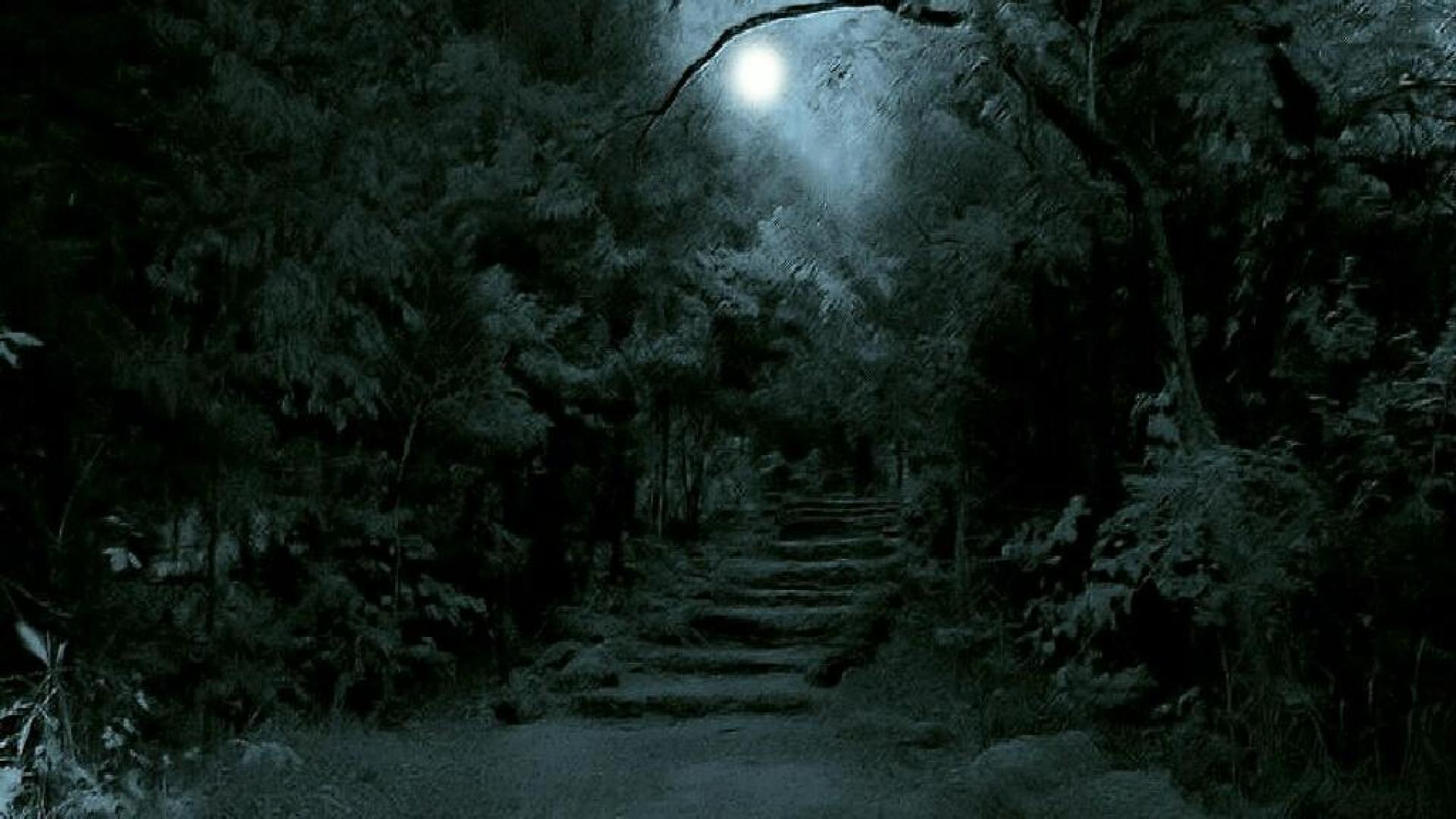 Dark Forest Wallpapers WallpapersInk High Resolution