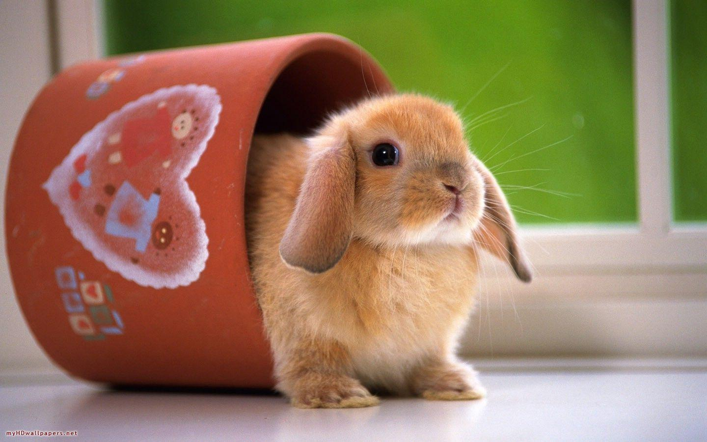Top 33 Beautiful And Cute Rabbit Wallpapers In HD - | Images .