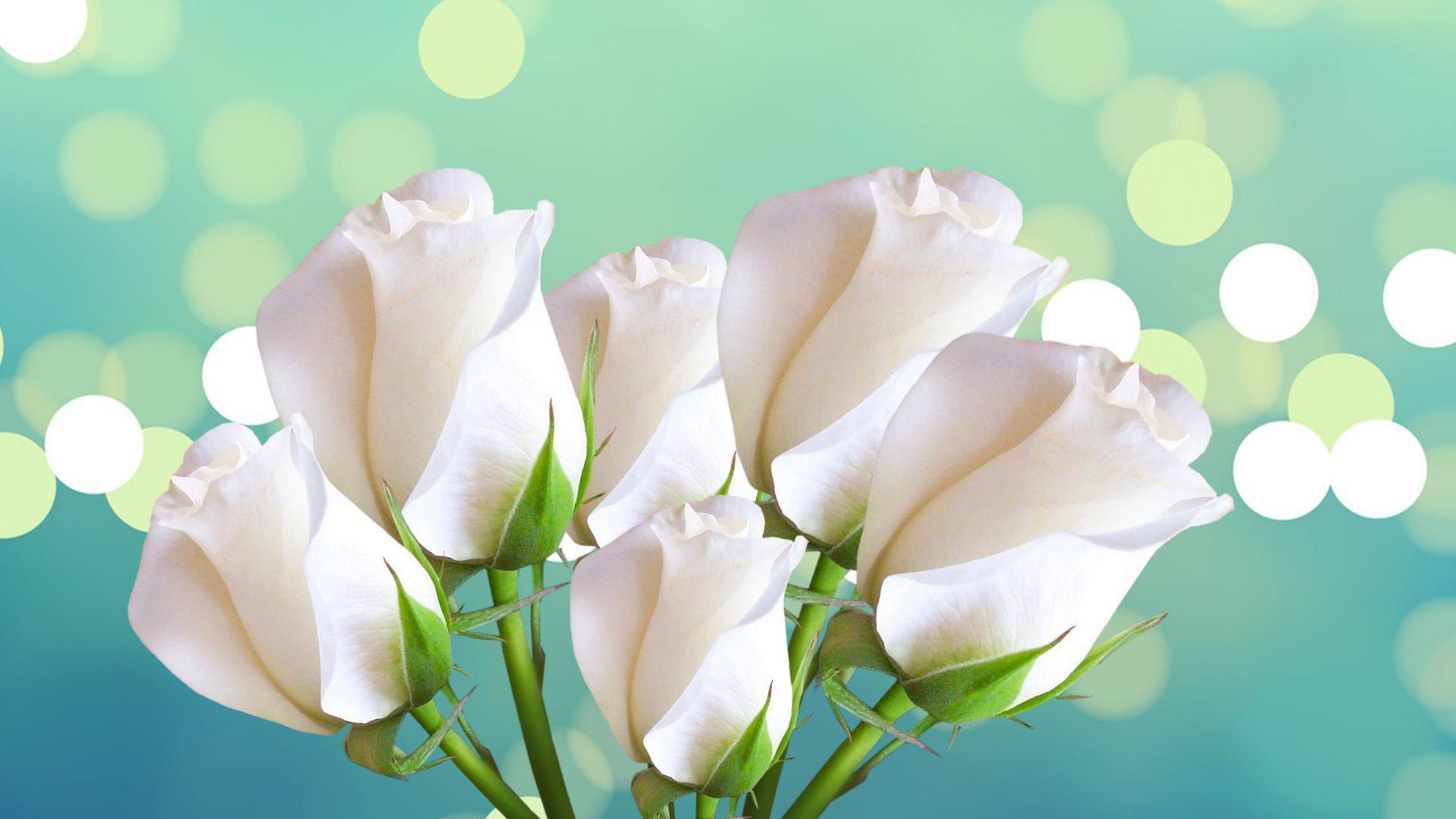 Beautiful White Rose Wallpapers Wallpaper Cave