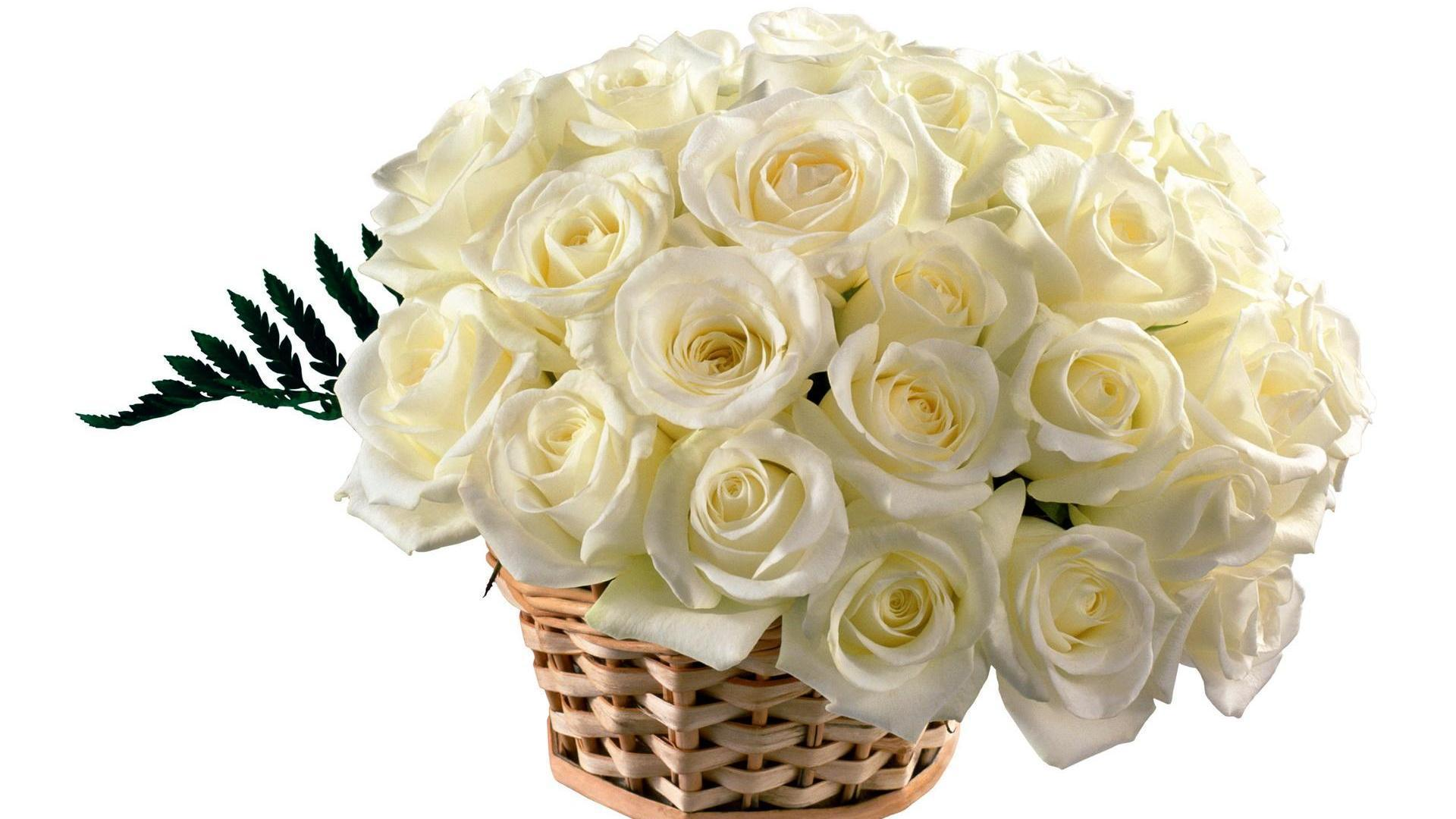 Beautiful White Rose Wallpapers Wallpaper Cave