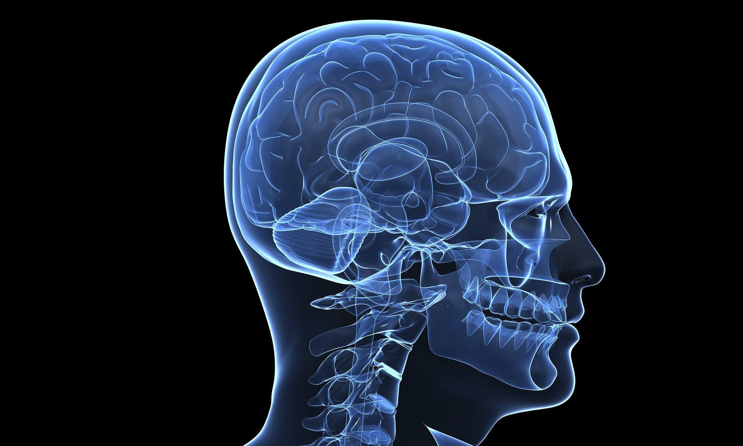 Brain Anatomy Wallpapers - Wallpaper Cave