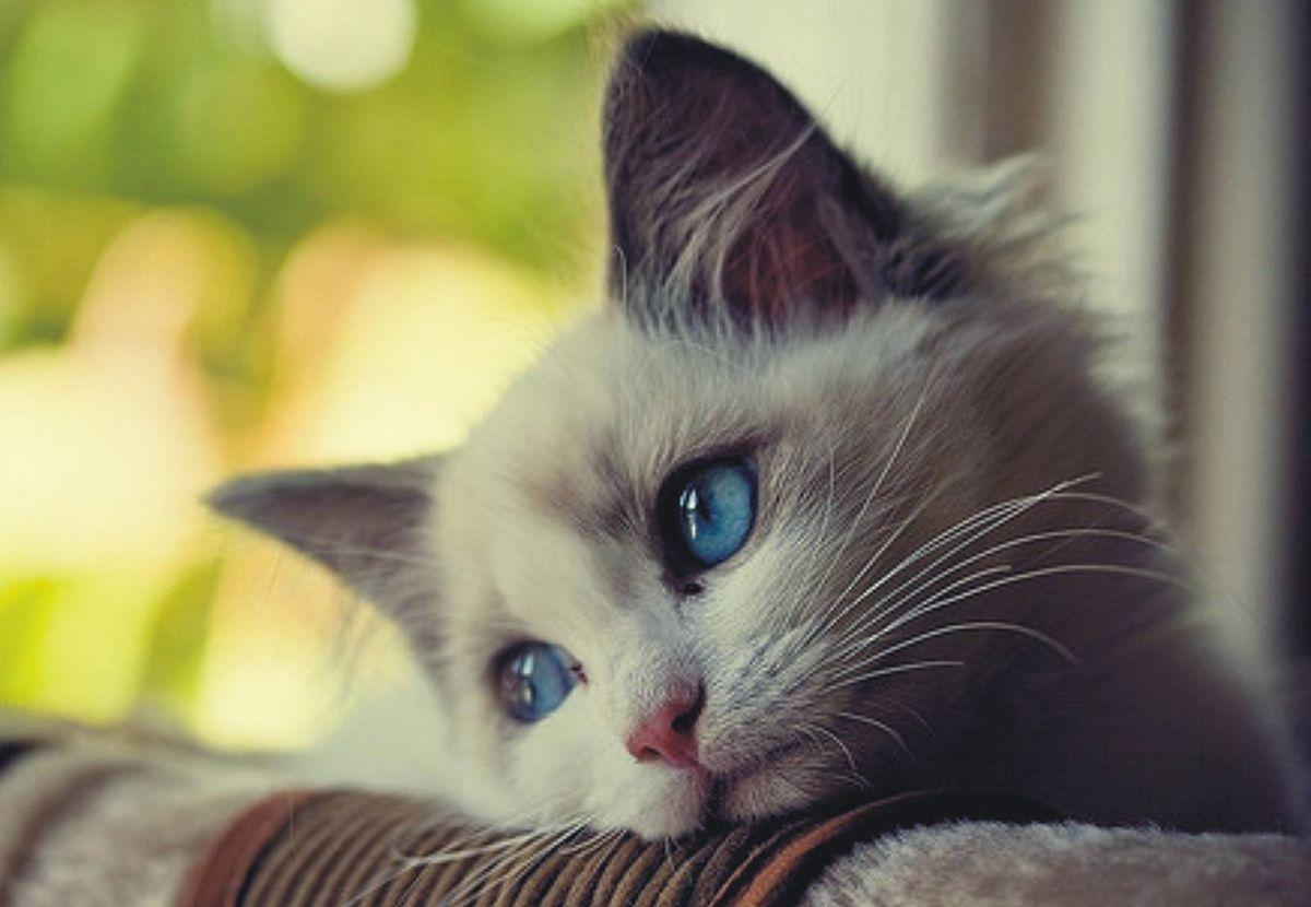 Sad Cat Wallpapers Wallpaper Cave