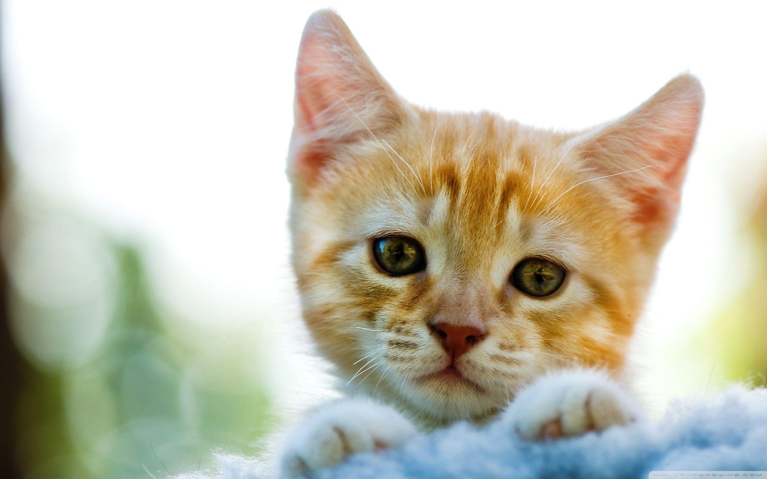 Sad Kitty ❤ 4K HD Desktop Wallpapers for • Tablet