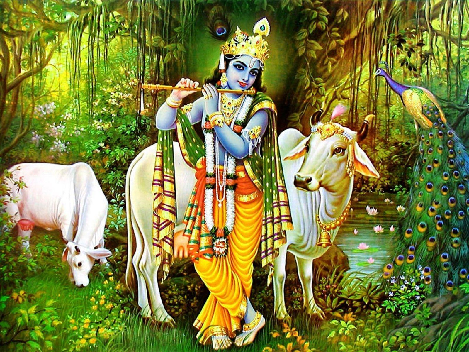 Lord Krishna and cow poster wallpapers