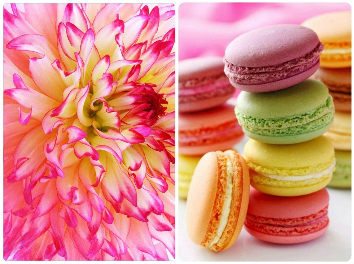 Colorful macarons wallpapers wallpaper cave - Macaron iphone wallpaper ...