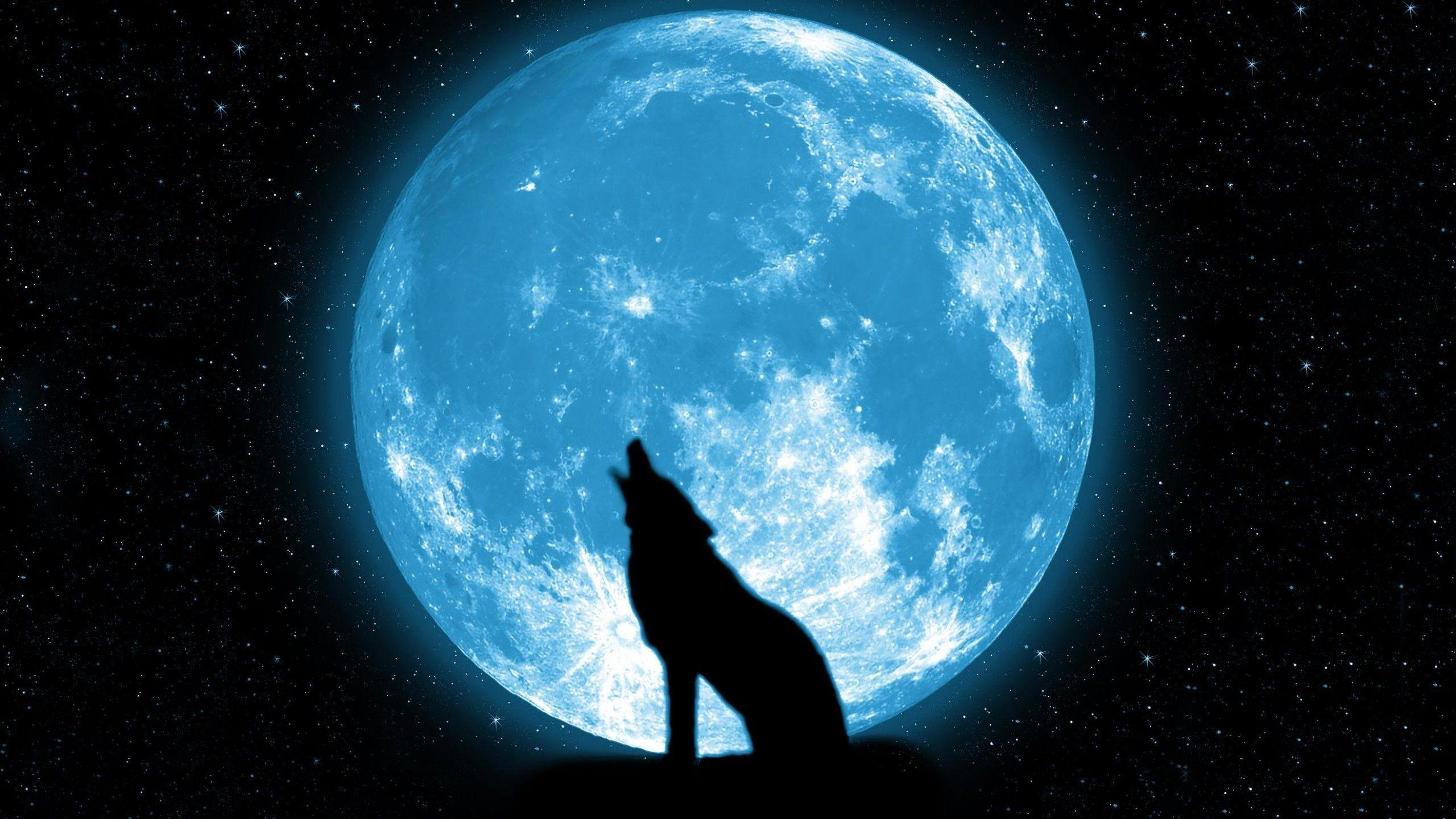 Howling Wolf Wallpapers Widescreen For Desktop Wallpaper 2560 X 1440