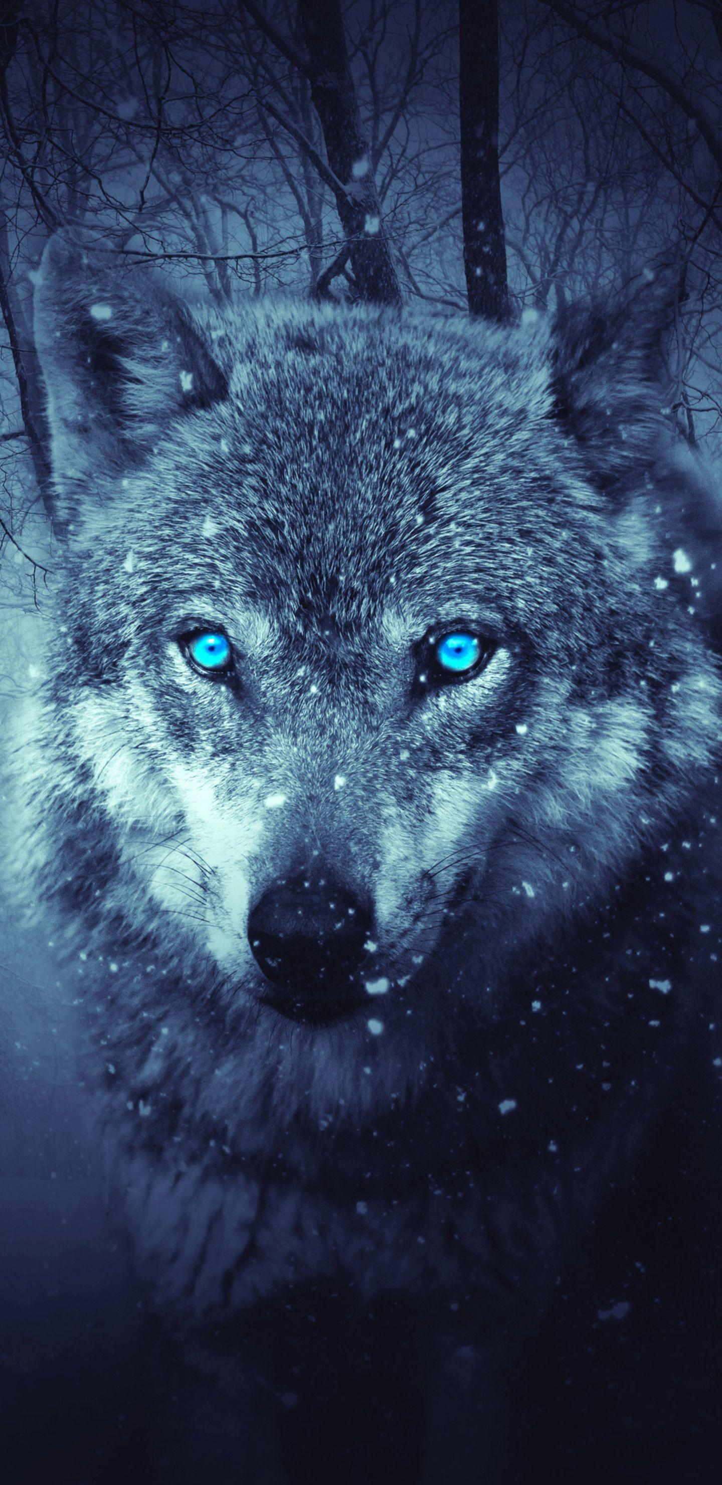Galaxy Wolf Wallpapers - Wallpaper Cave