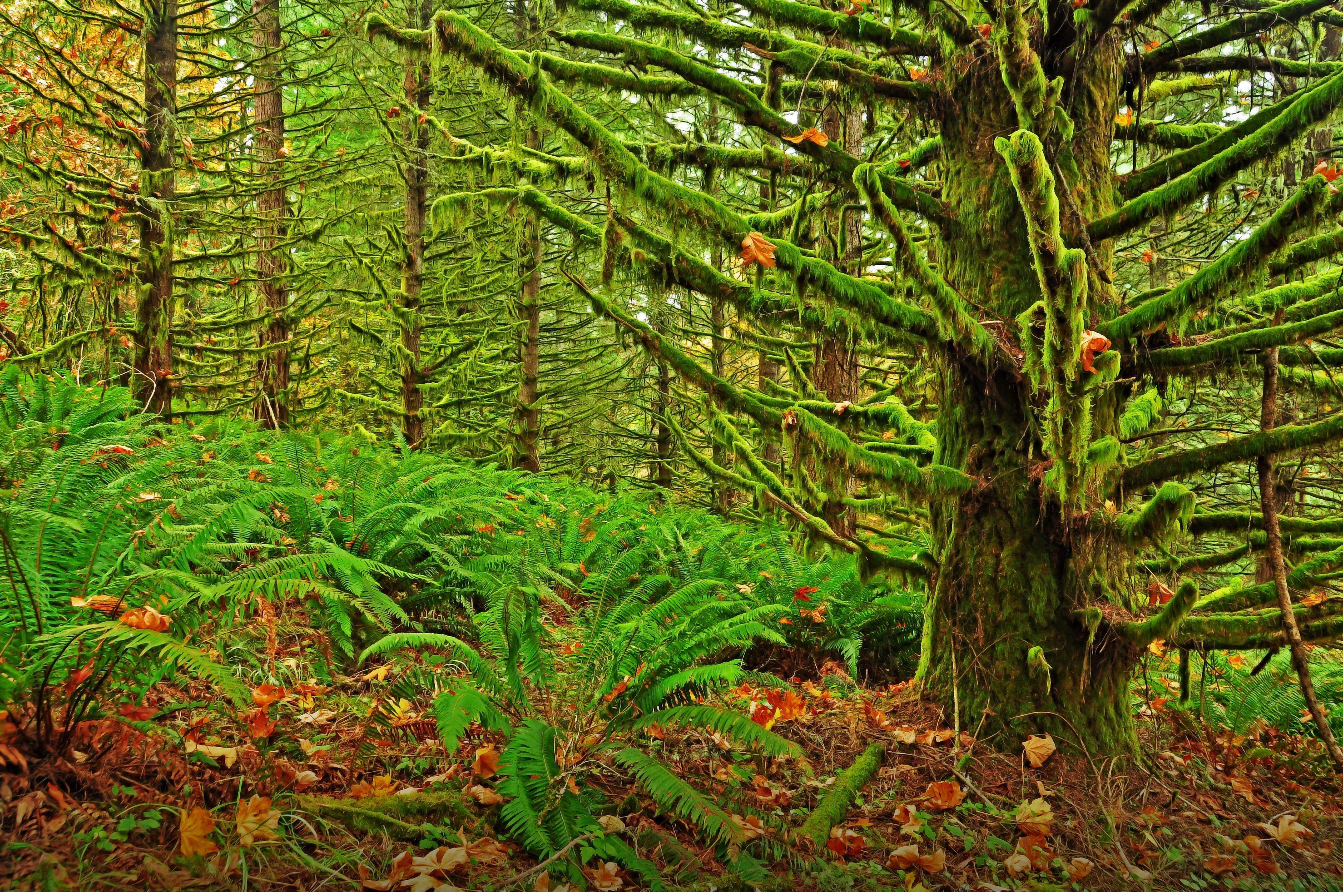 Forest Moss Wallpapers - Wallpaper Cave