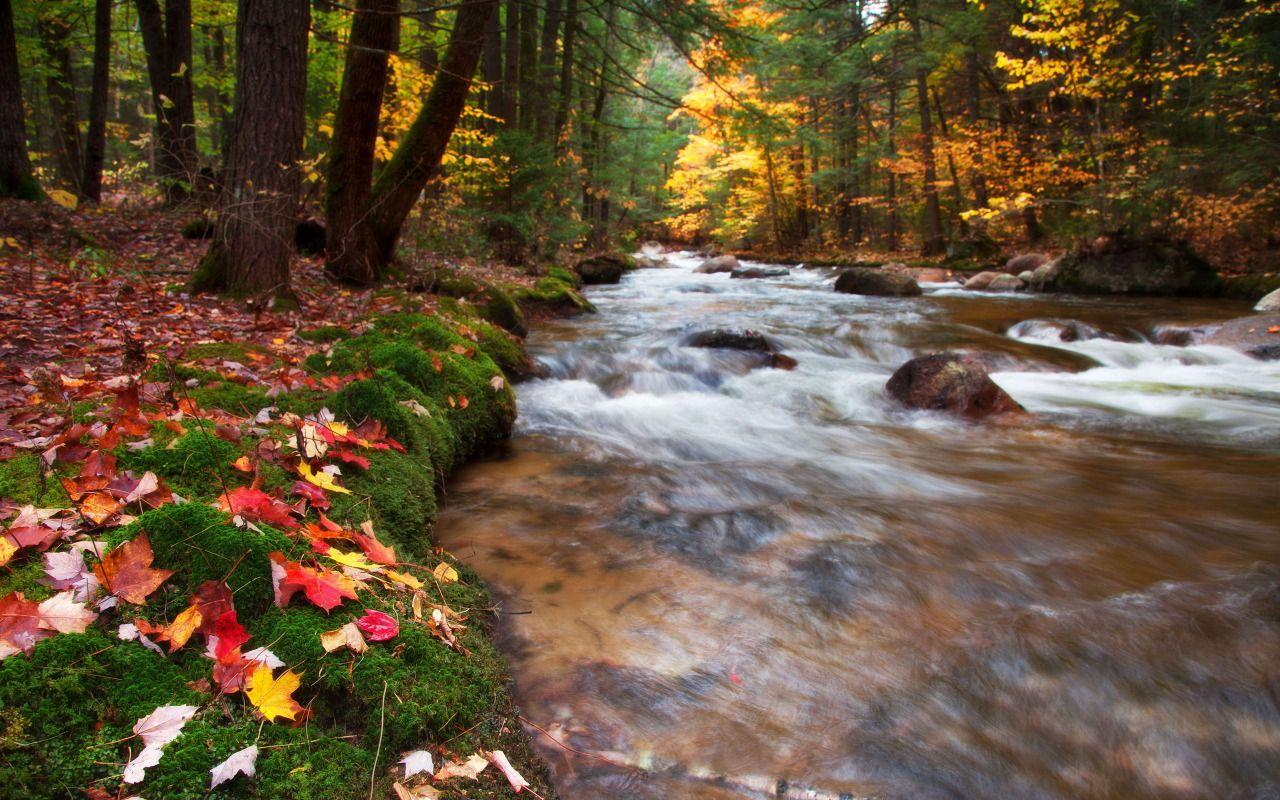 Babbling Brook, United States, New Hampshire, White Mountains