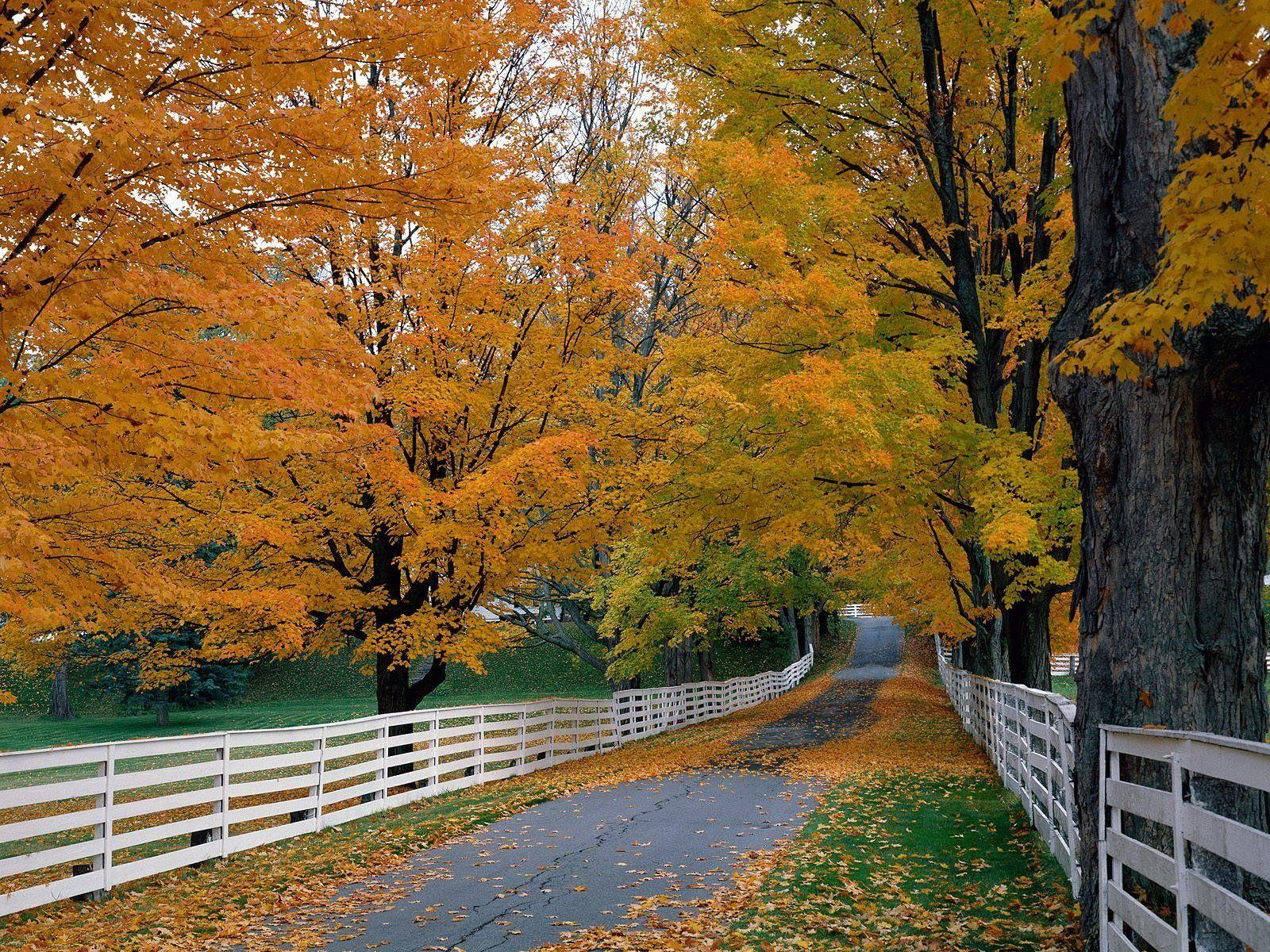 Forest: Autumn Hampshire Backroad Scenic New Fence Forest Wallpapers