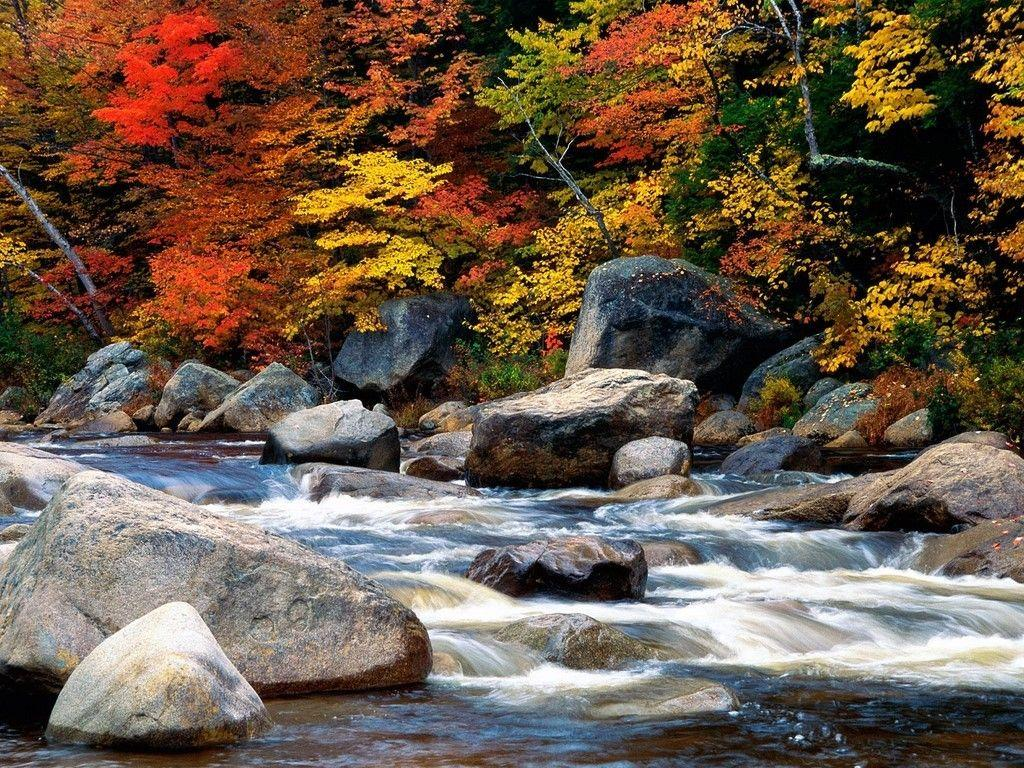 Misc: White Mountains New Hampshire Autumn Leaves Trees Rocks Stream