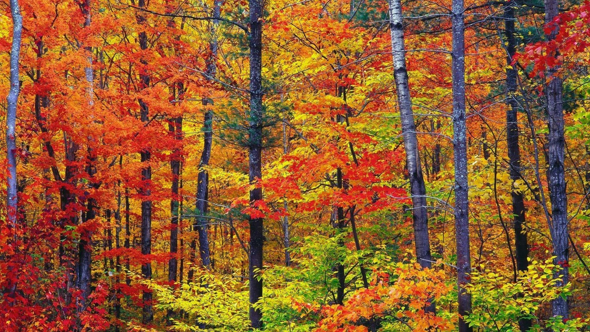Nature colors new hampshire wallpapers
