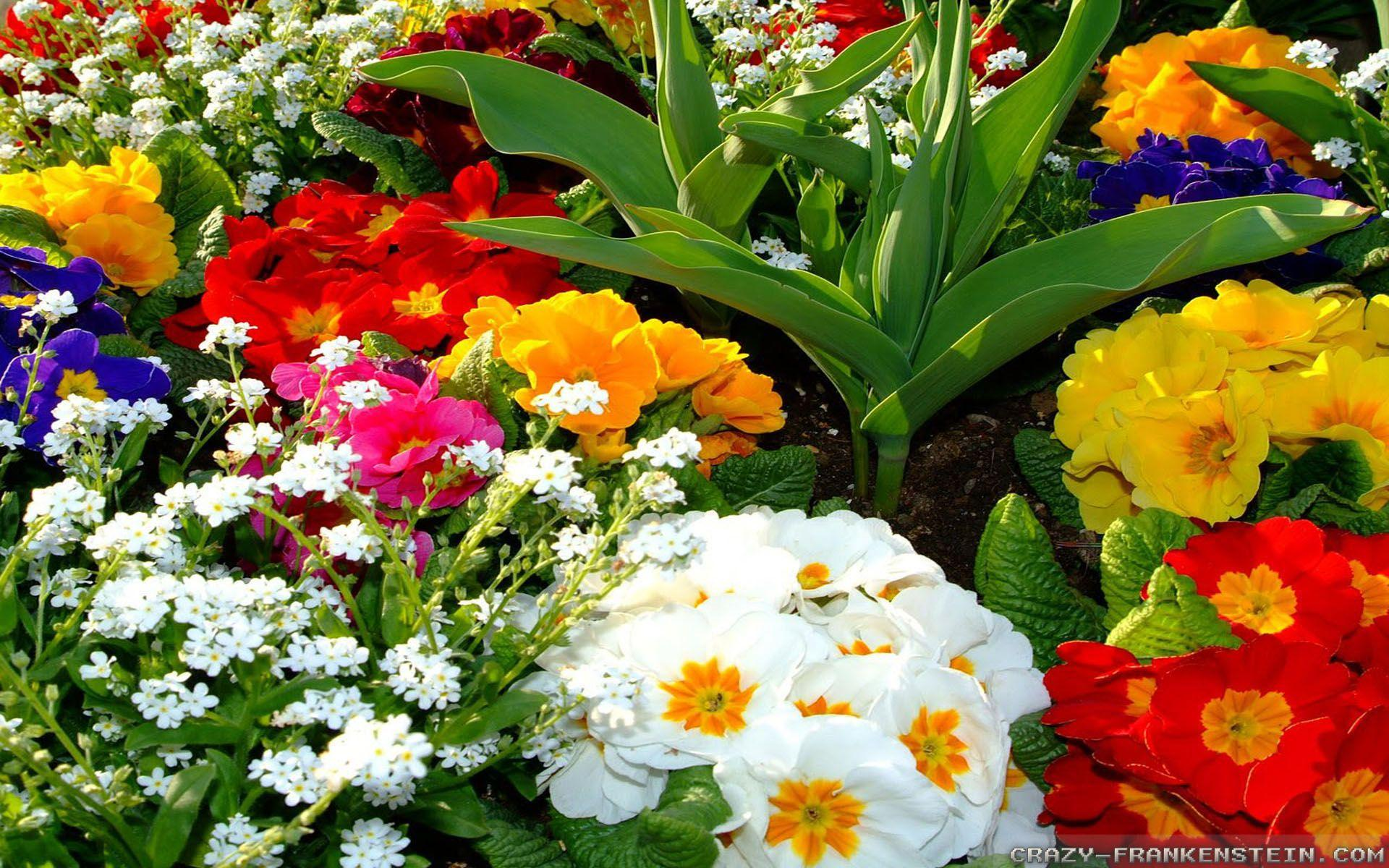 Beautiful Colorful Flowers Wallpapers - Wallpaper Cave