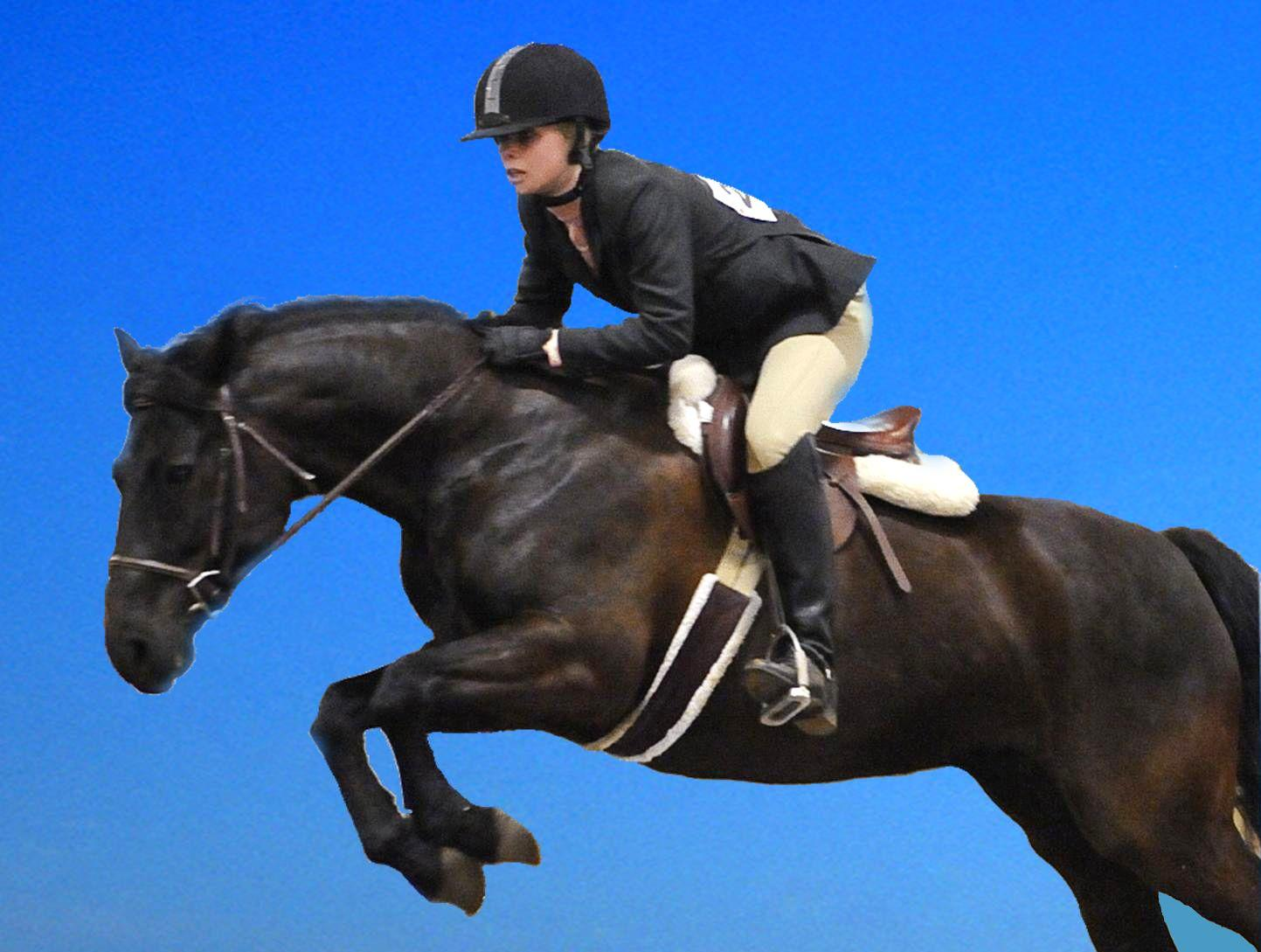 Black Horse Jumping Wallpapers Wallpaper Cave