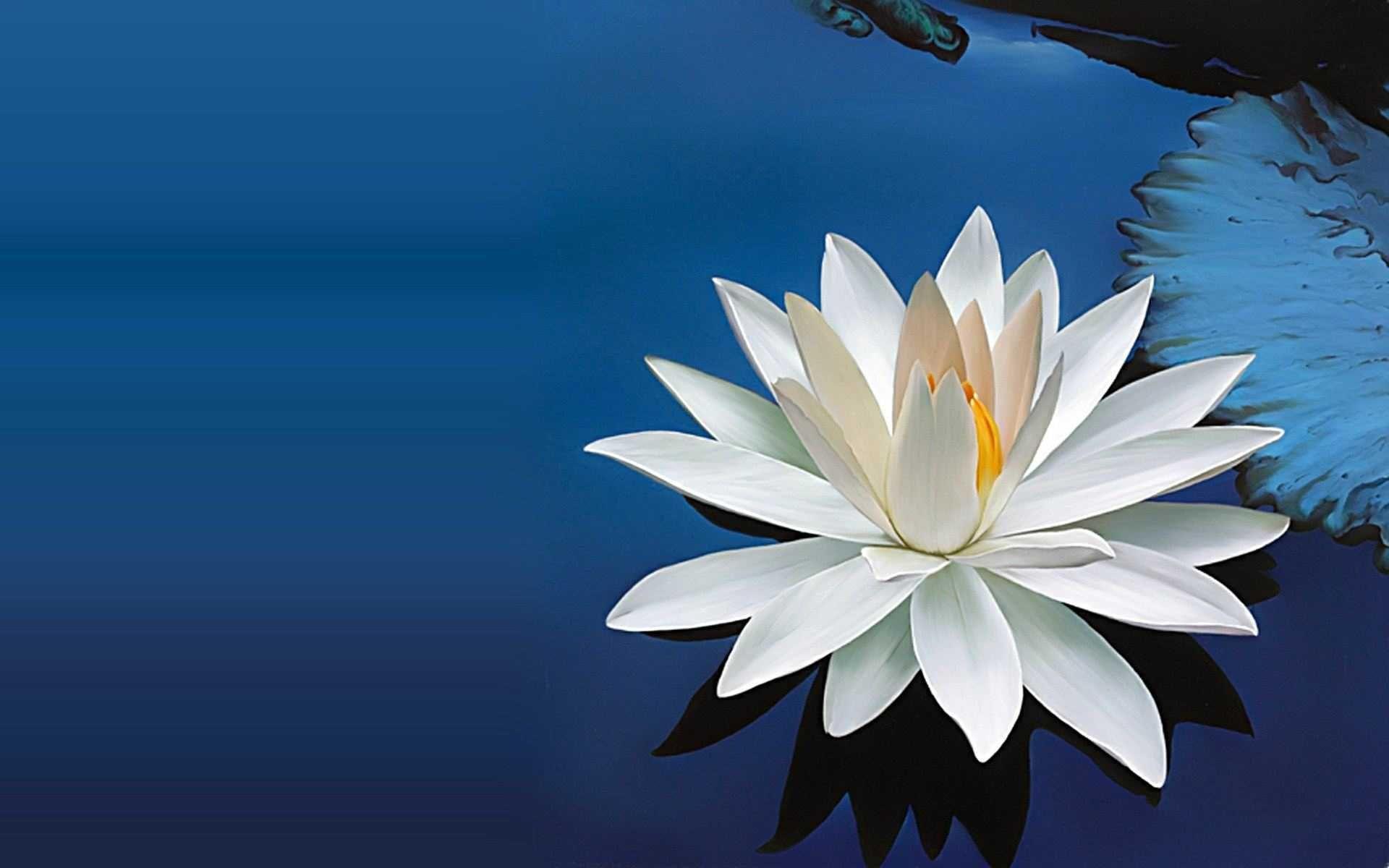 Lotus Flowers Wallpapers - Wallpaper Cave