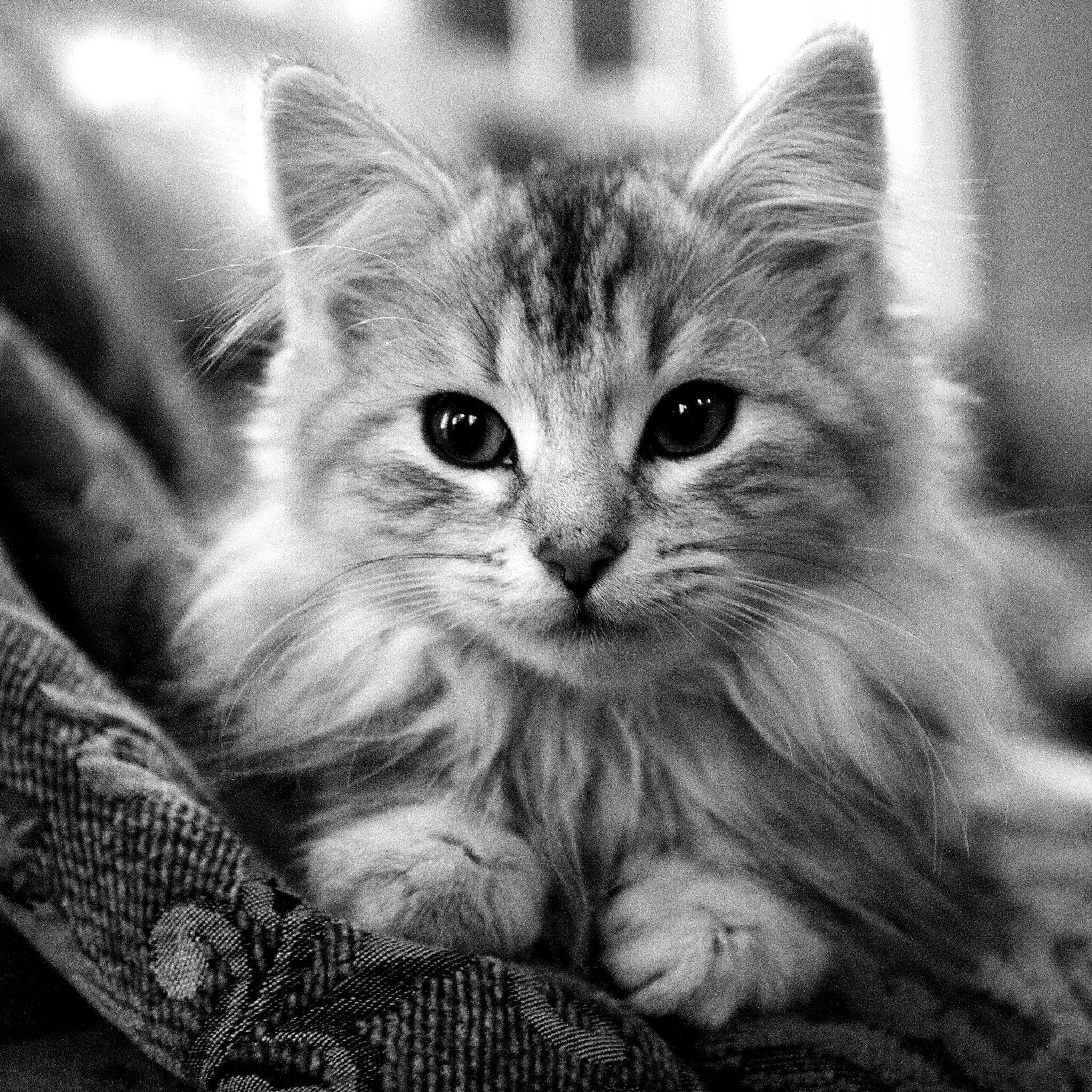 Black And White Wallpapers Of Cats Wallpaper Cave