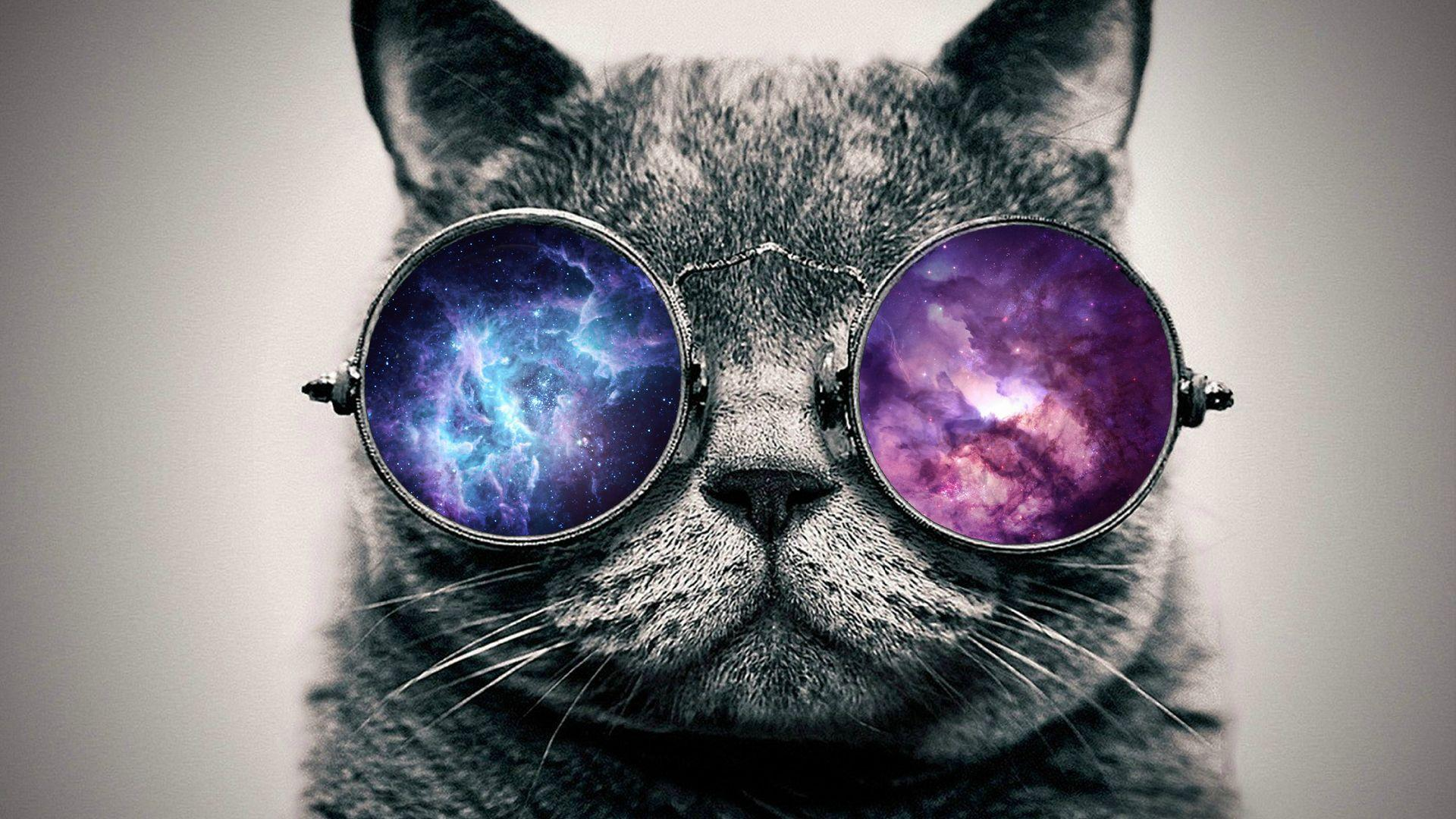 Cat With Glasses Wallpapers Wallpaper Cave