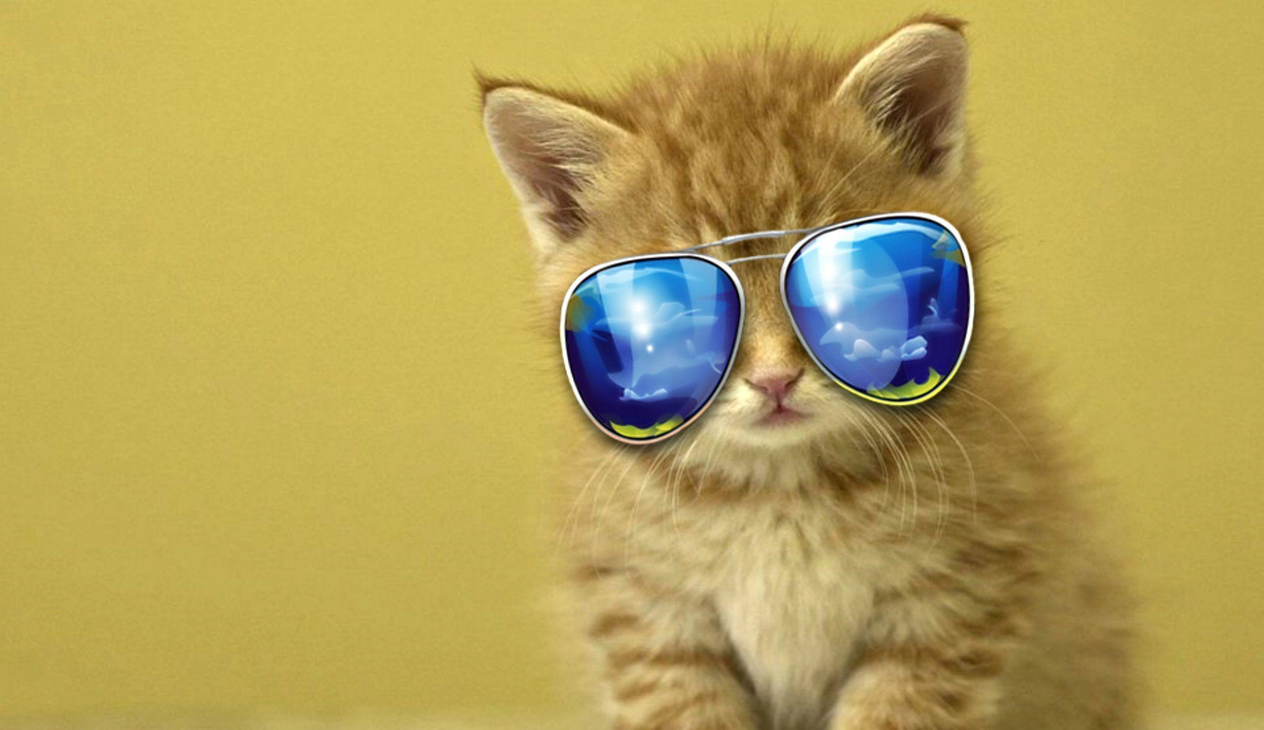 Cool Cat Iphone Wallpaper