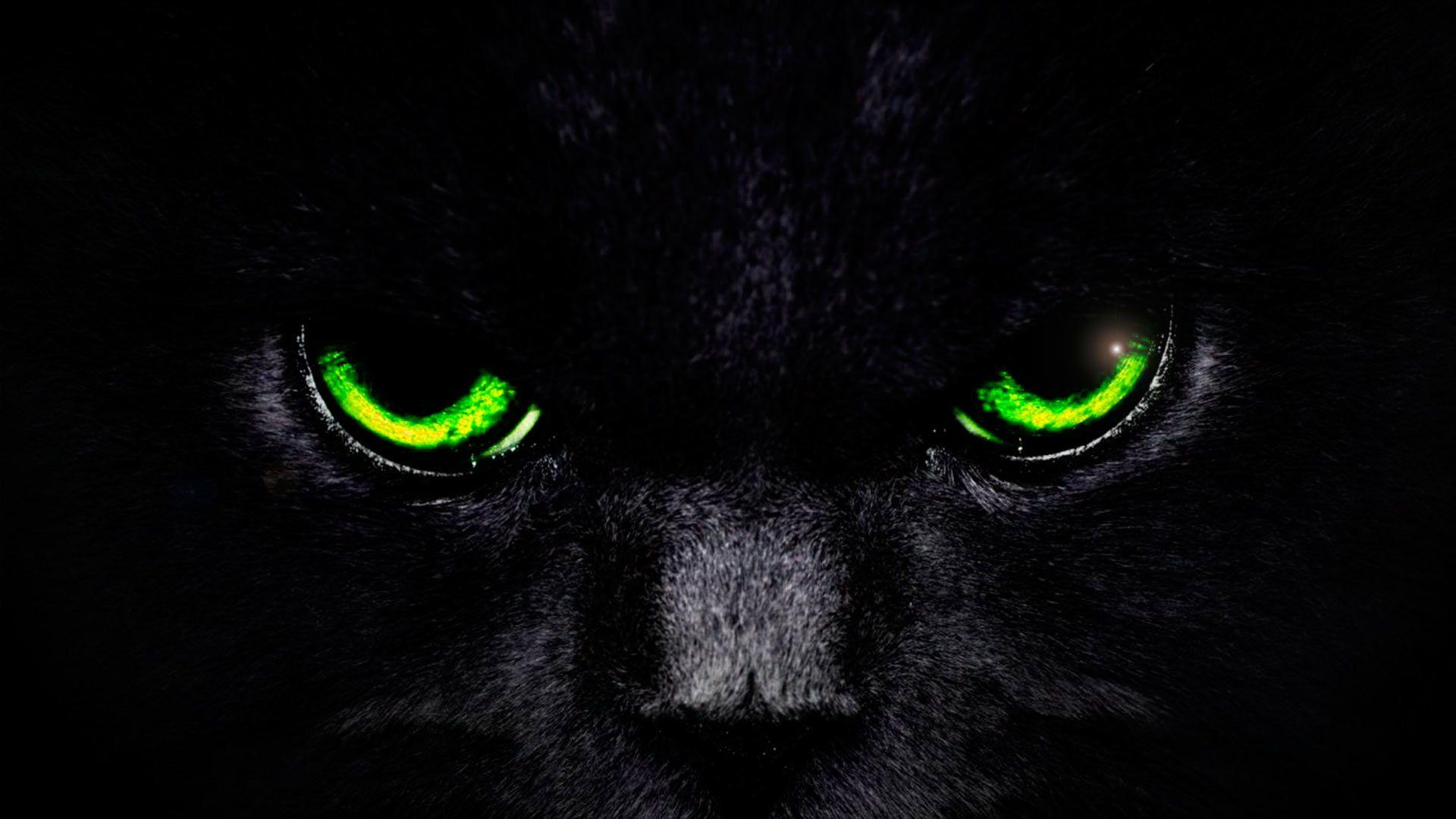 Cat Eye Wallpapers Wallpaper Cave