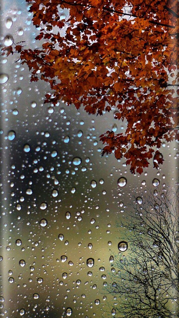 Rain drops wallpapers 3d wallpaper cave - Rain drop wallpaper hd ...