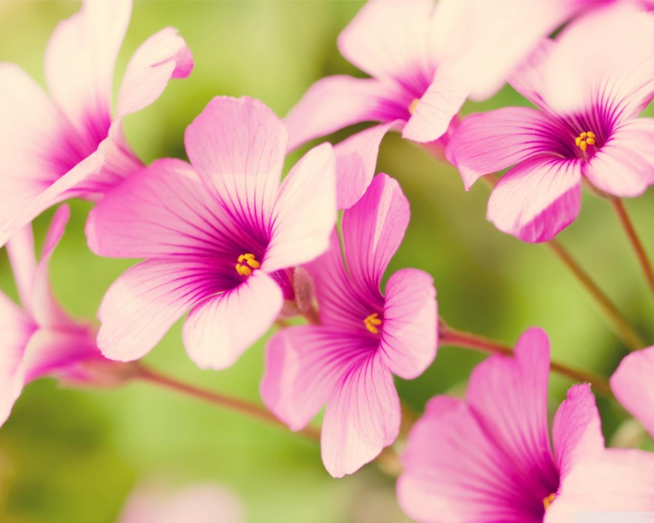 Download free flowers pictures rr collections.