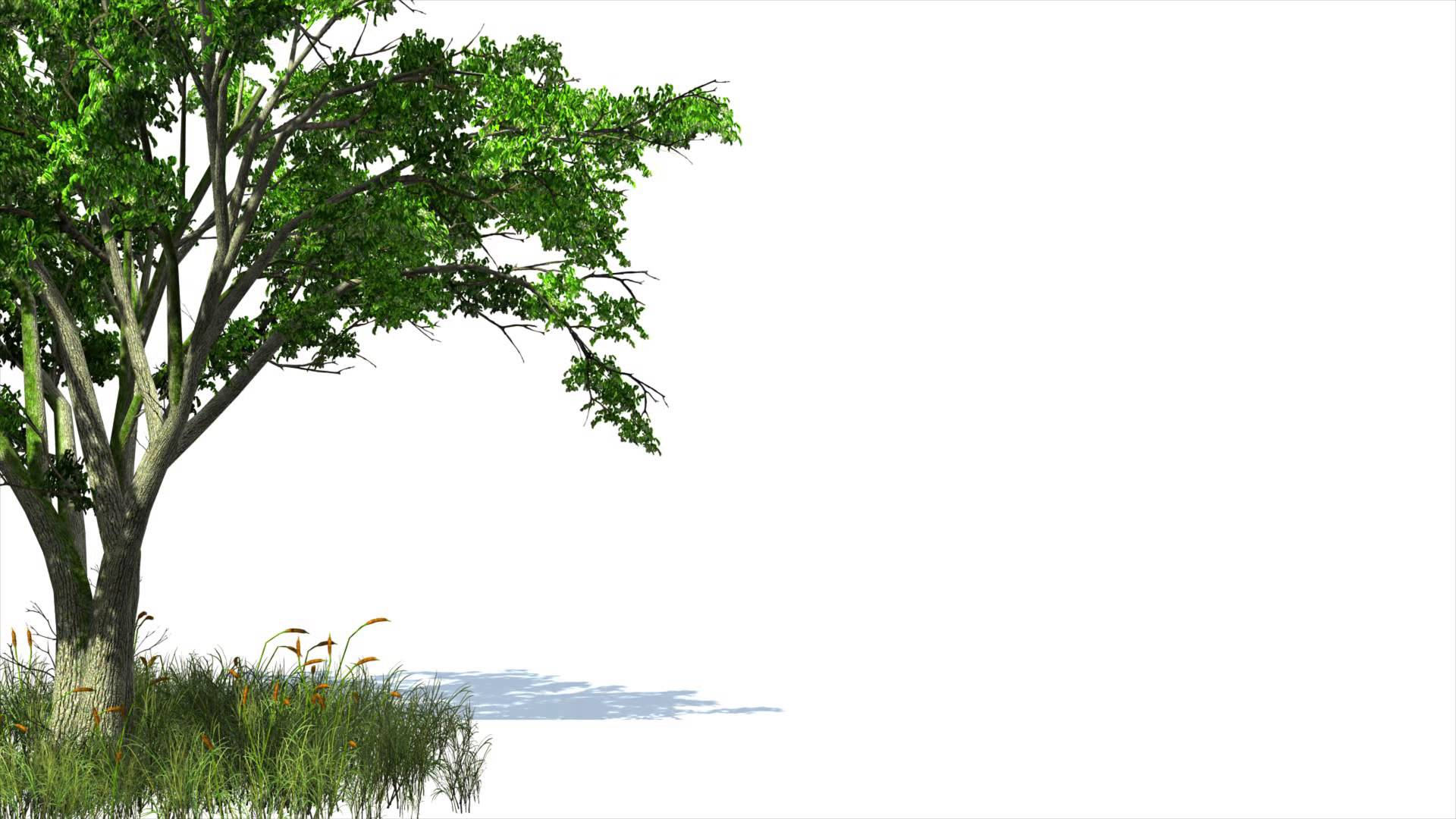 backgrounds tree wallpaper cave