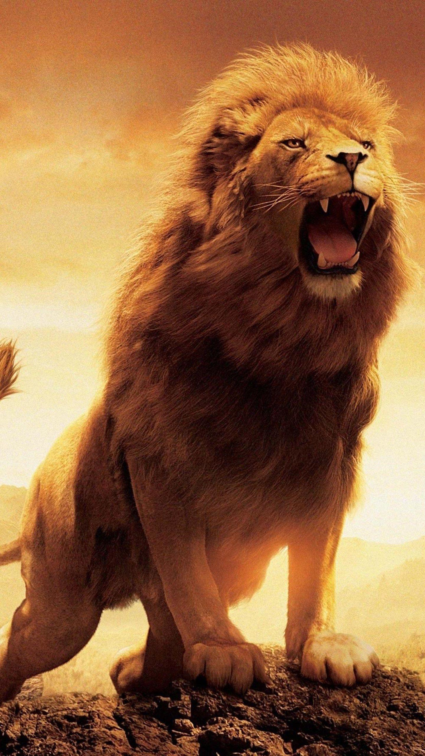 Narnia Lion Hd Wallpapers Wallpaper Cave