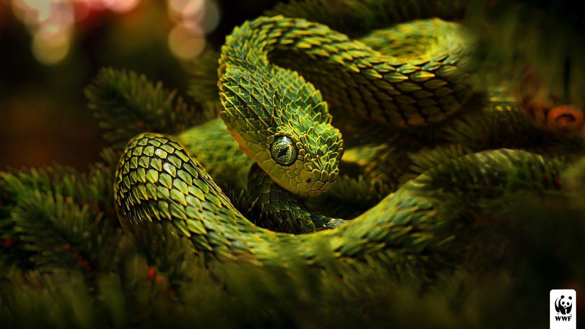 Viper Snake Hd Wallpapers Wallpaper Cave