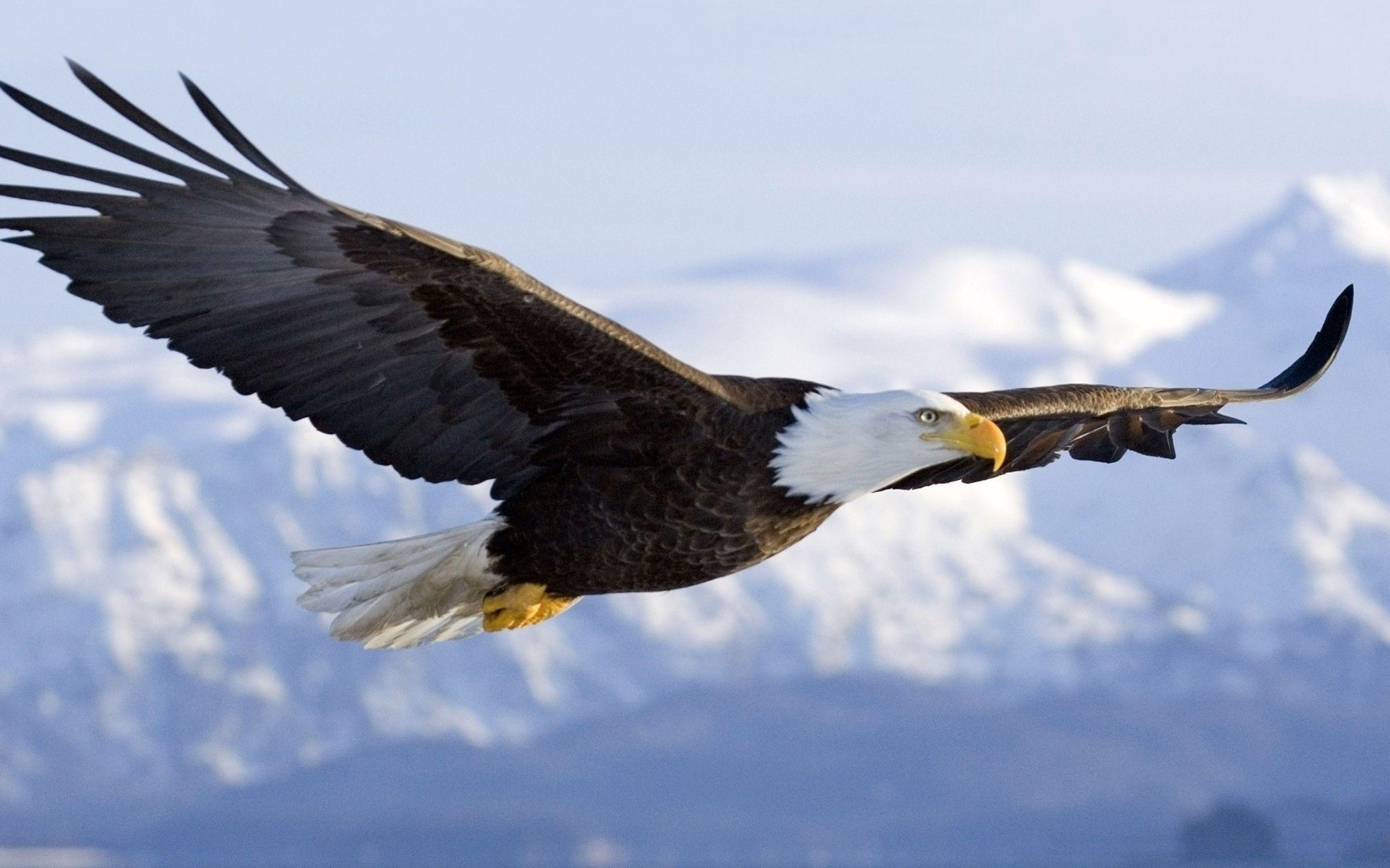 american eagle logo hd wallpapers wallpaper cave