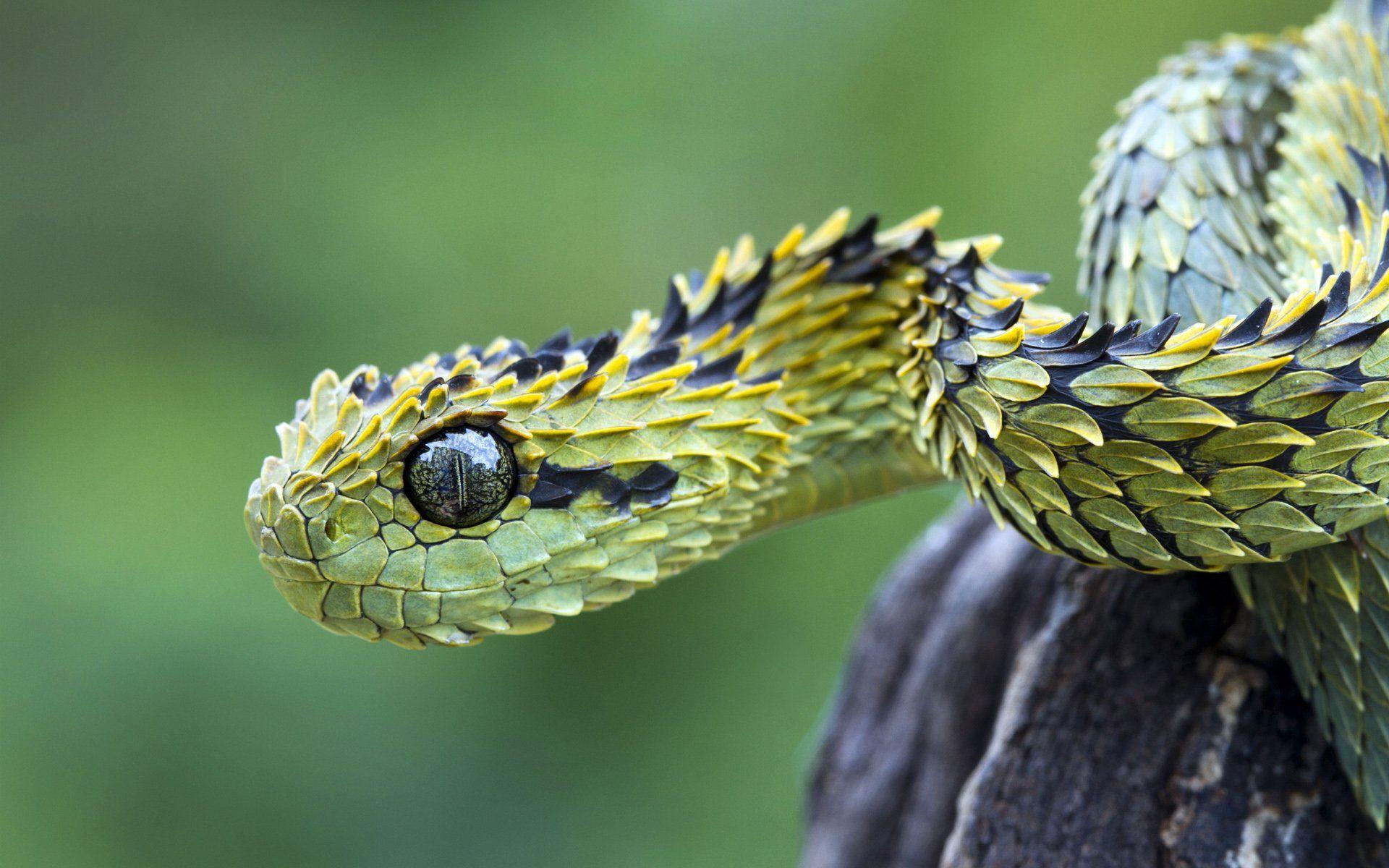 H D Reptiles Stoke 92+ Reptile And Fish S...