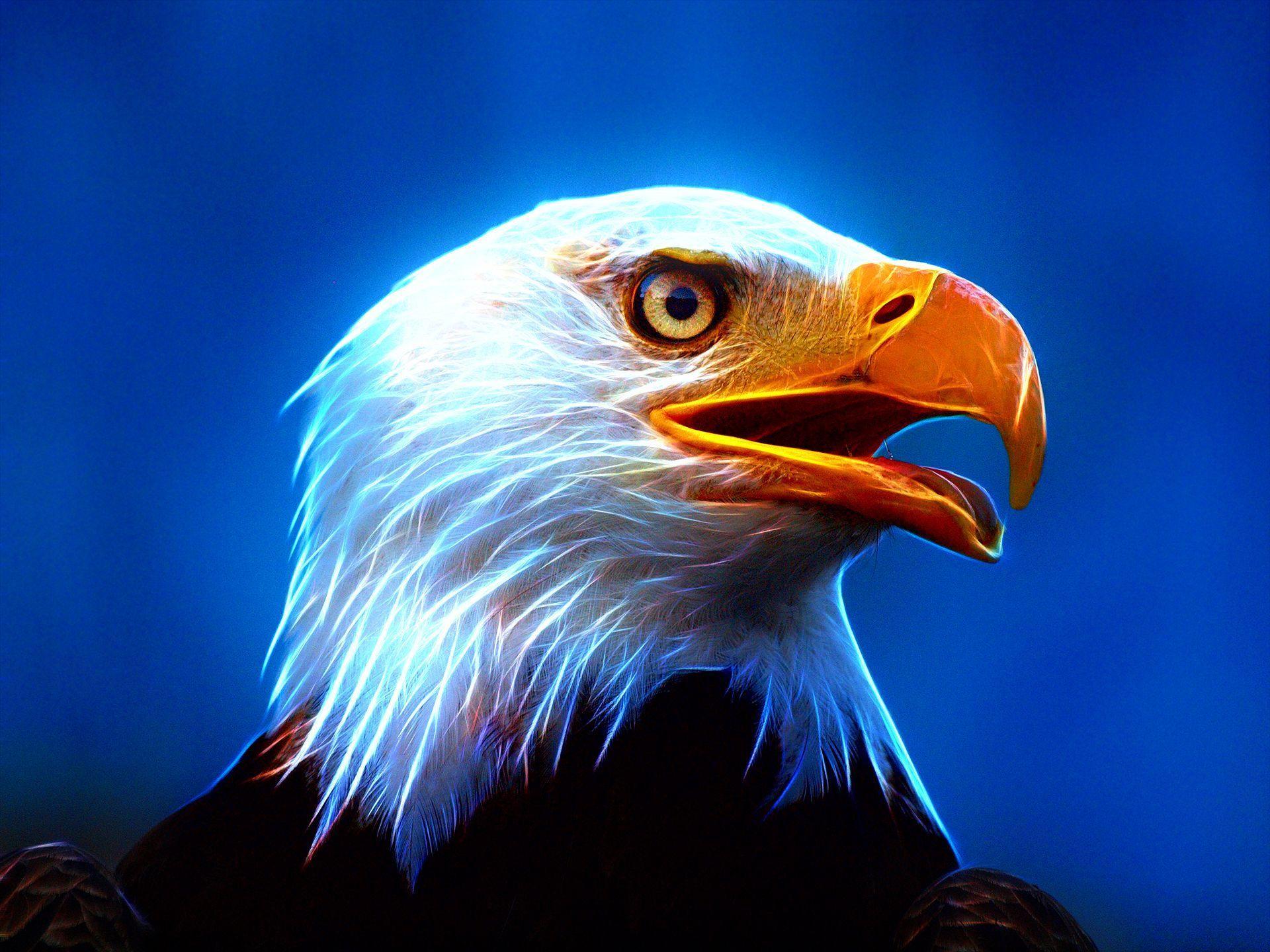 Download Fire Eagle Wallpaper Gallery Fondos De Pantalla