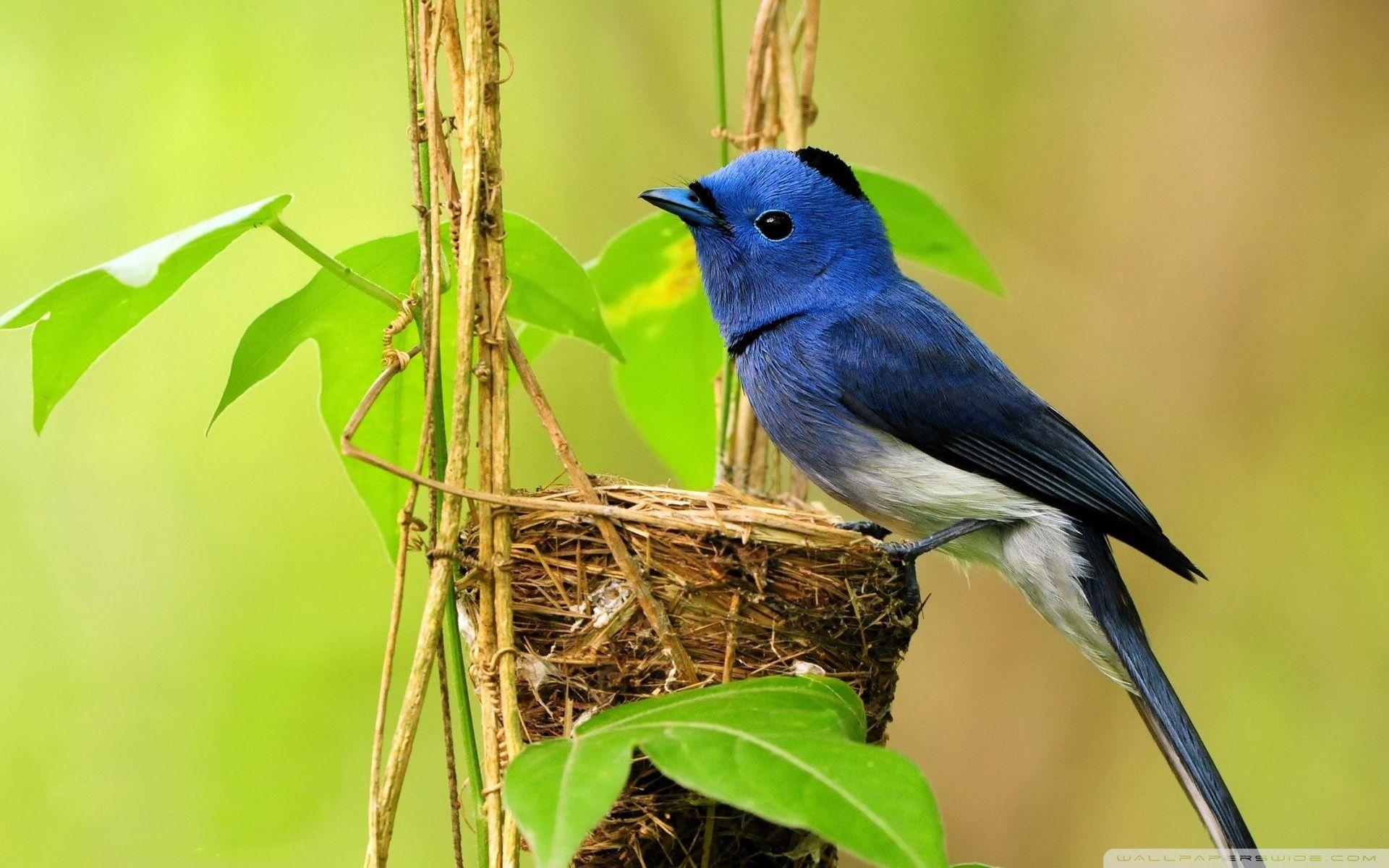 Wallpapers For Birds Wallpaper Cave