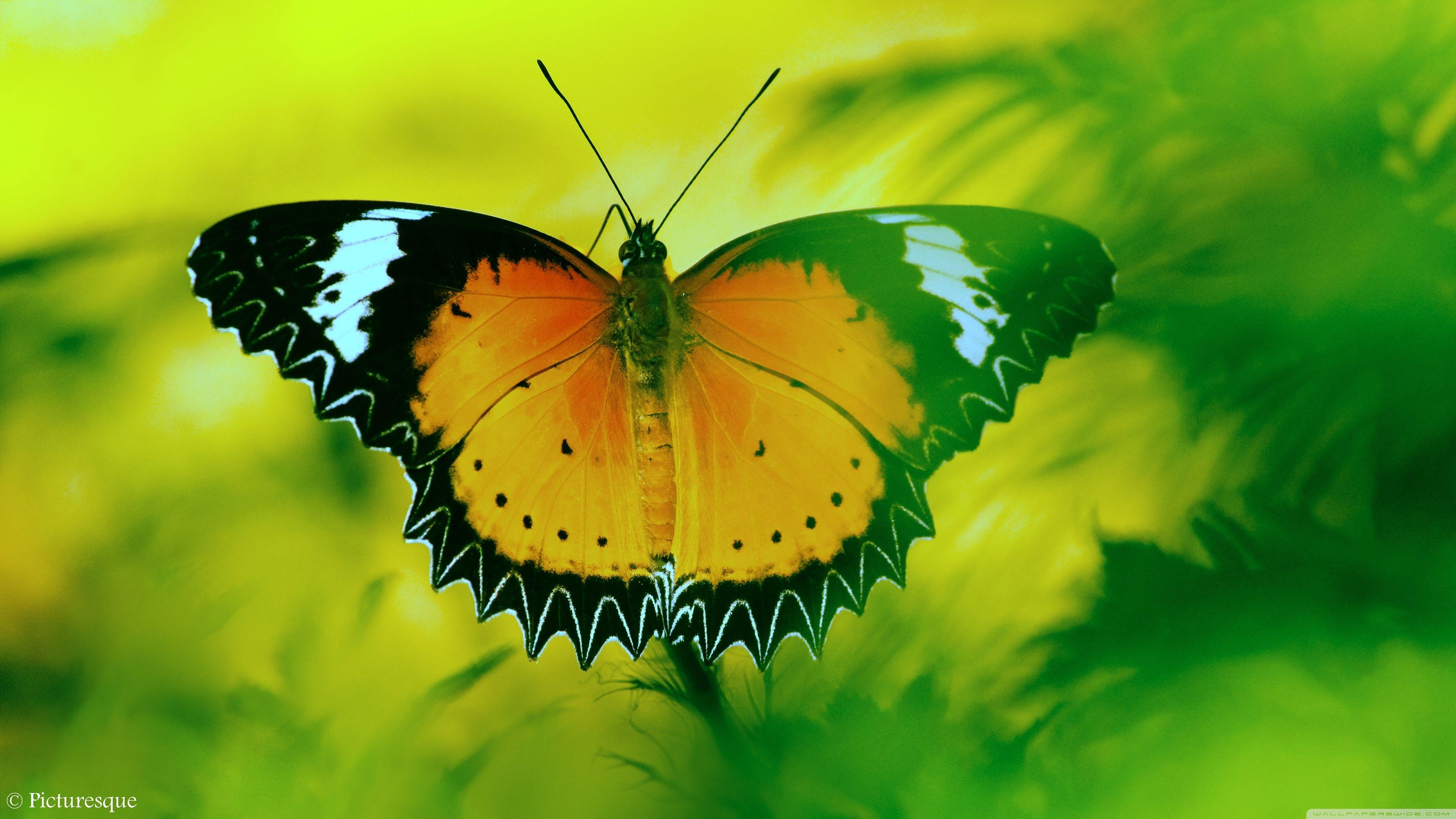 Butterfly 4K Wallpapers - Wallpaper Cave