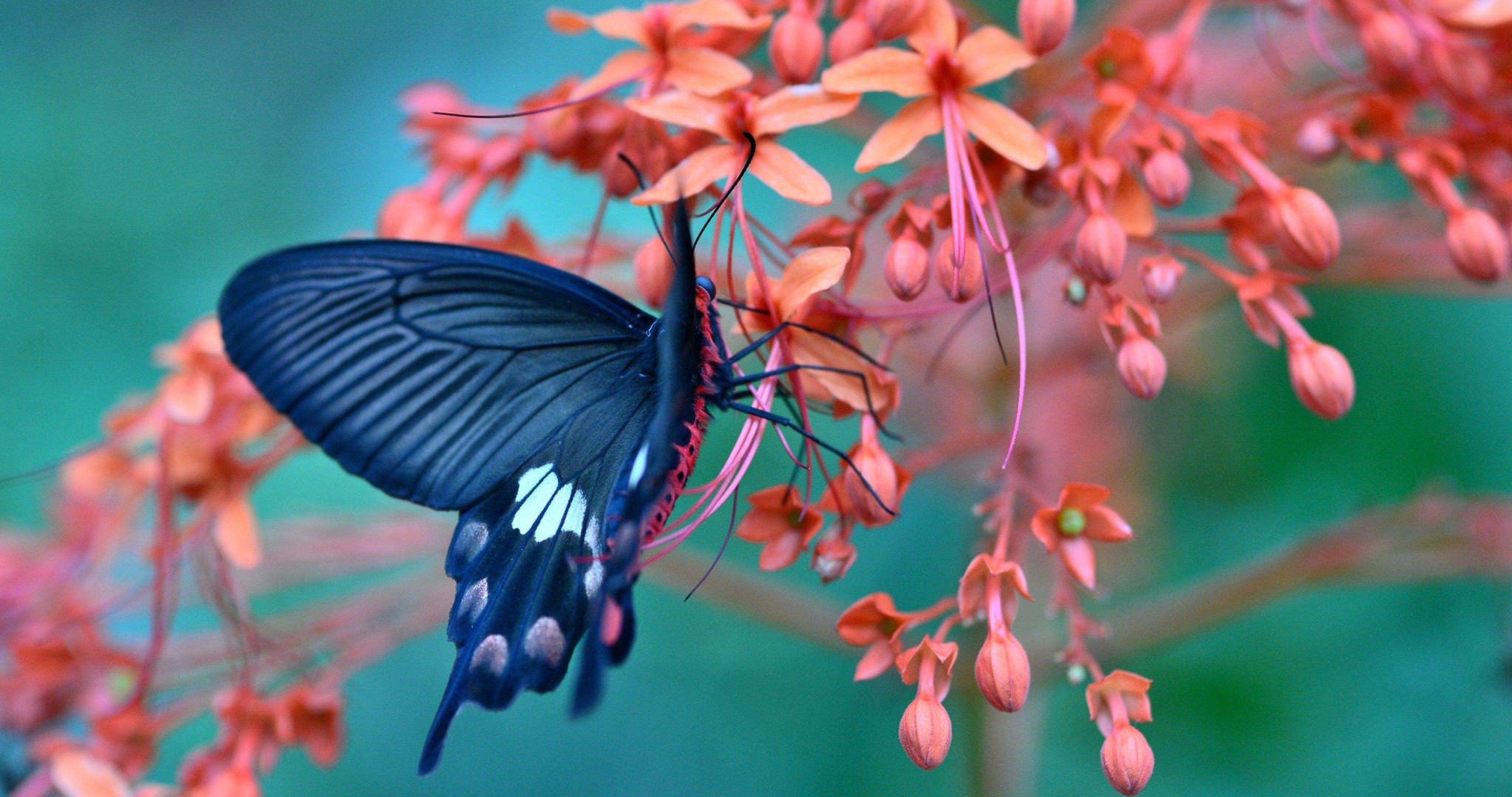 Wallpapers Hd Butterfly Wallpaper Cave