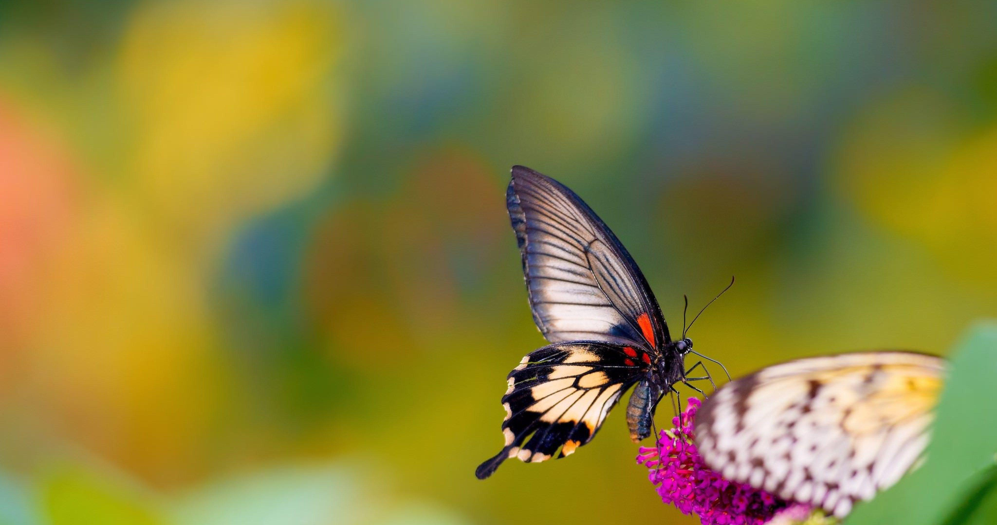 Butterfly 4k wallpapers wallpaper cave - Background images 4k hd ...