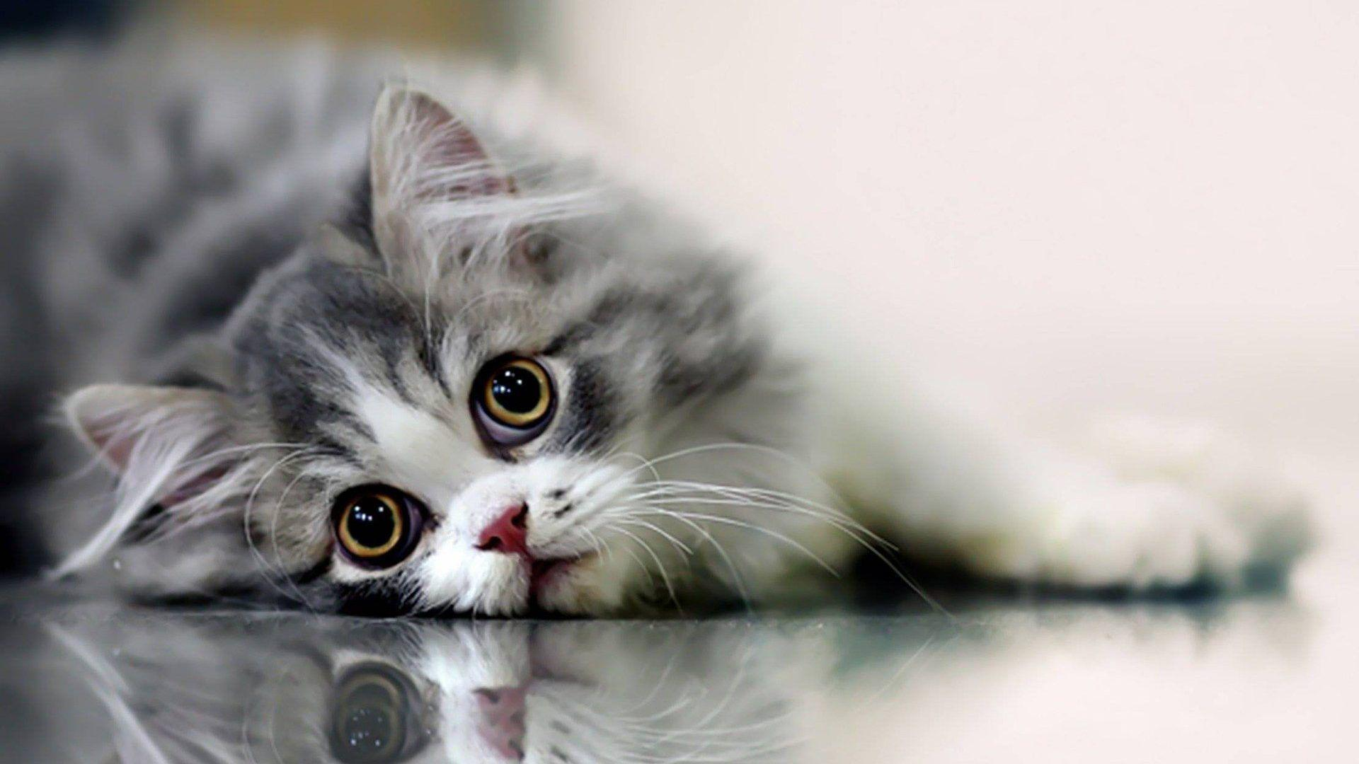 Cute Cat Wallpapers Desktop Wallpaper Cave