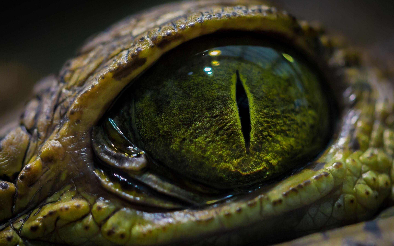 Reptile Eye Wallpapers Wallpaper Cave