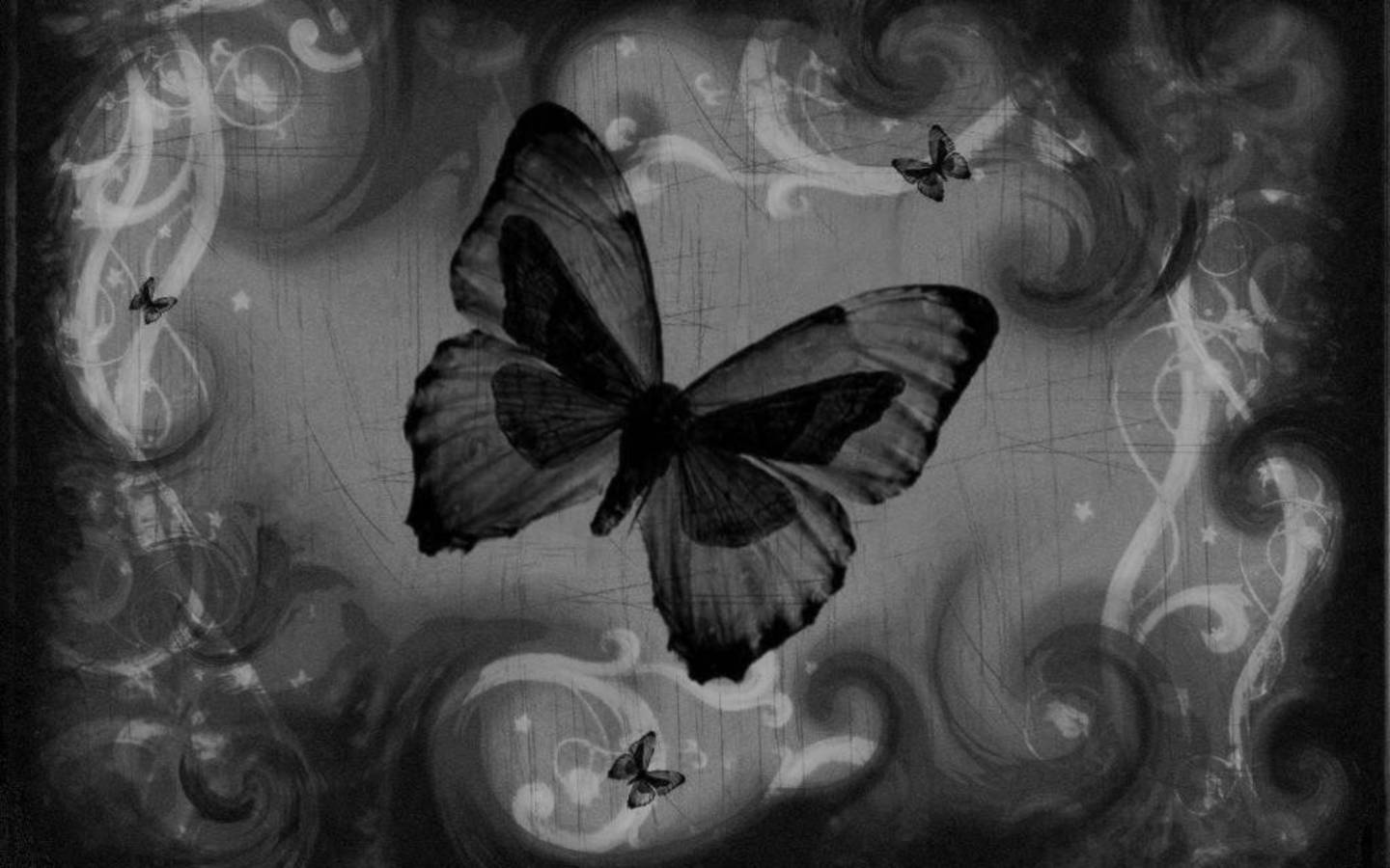 1400 Black Butterfly HD Images Wallpaper