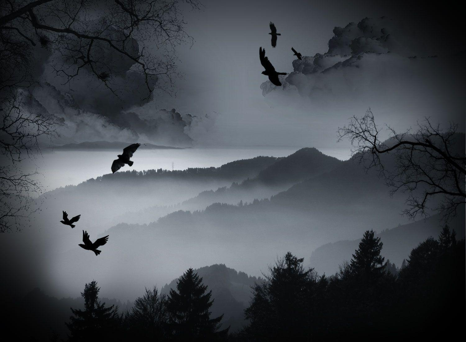 Crows Wallpapers Wallpaper Cave