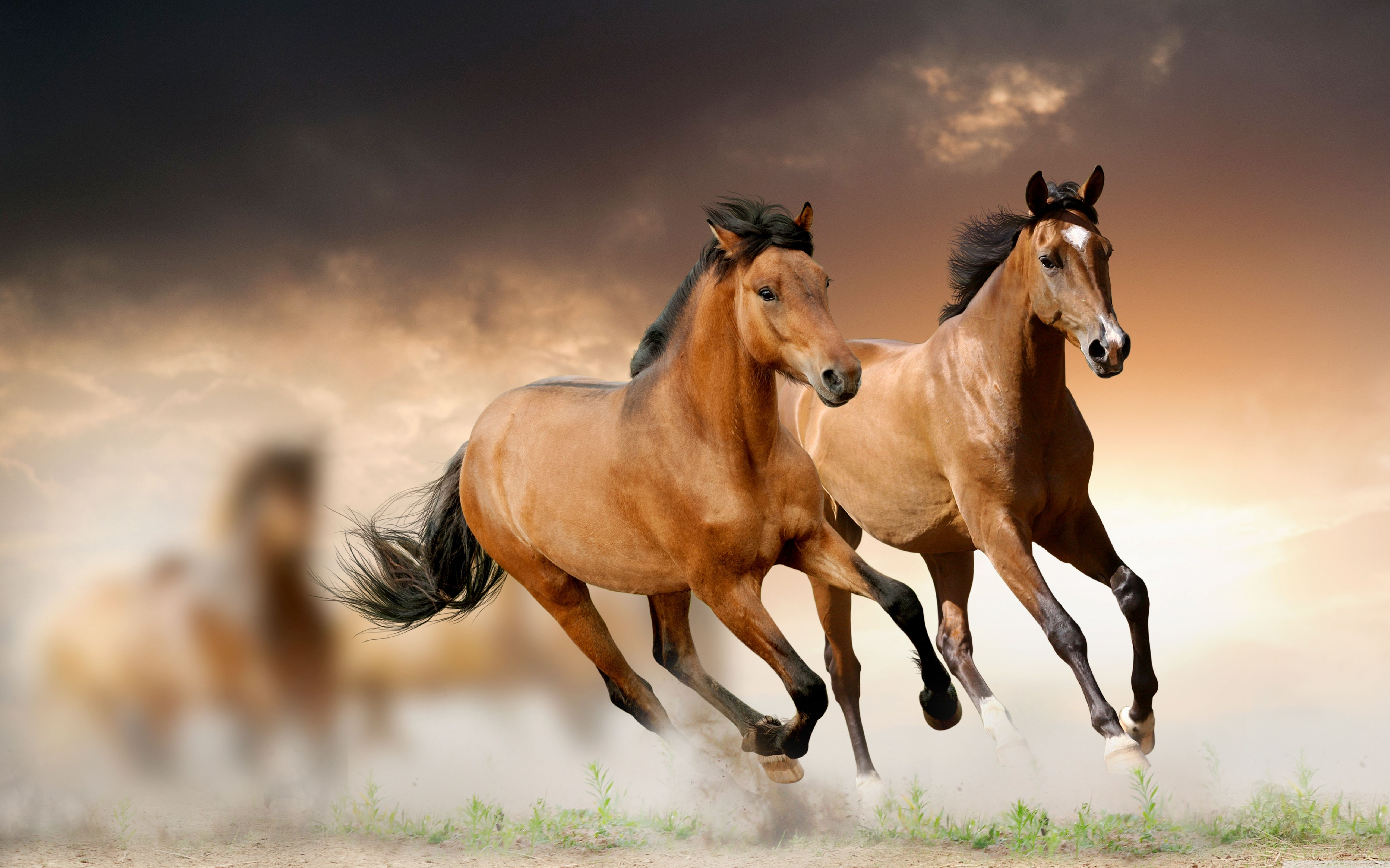 Free Wallpapers Of Horses Wallpaper Cave