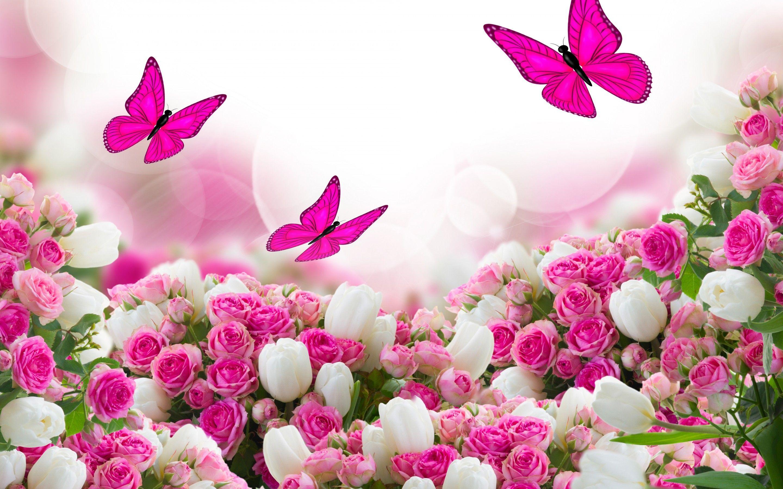 Beautiful Rose Flower Wallpapers Wallpaper Cave