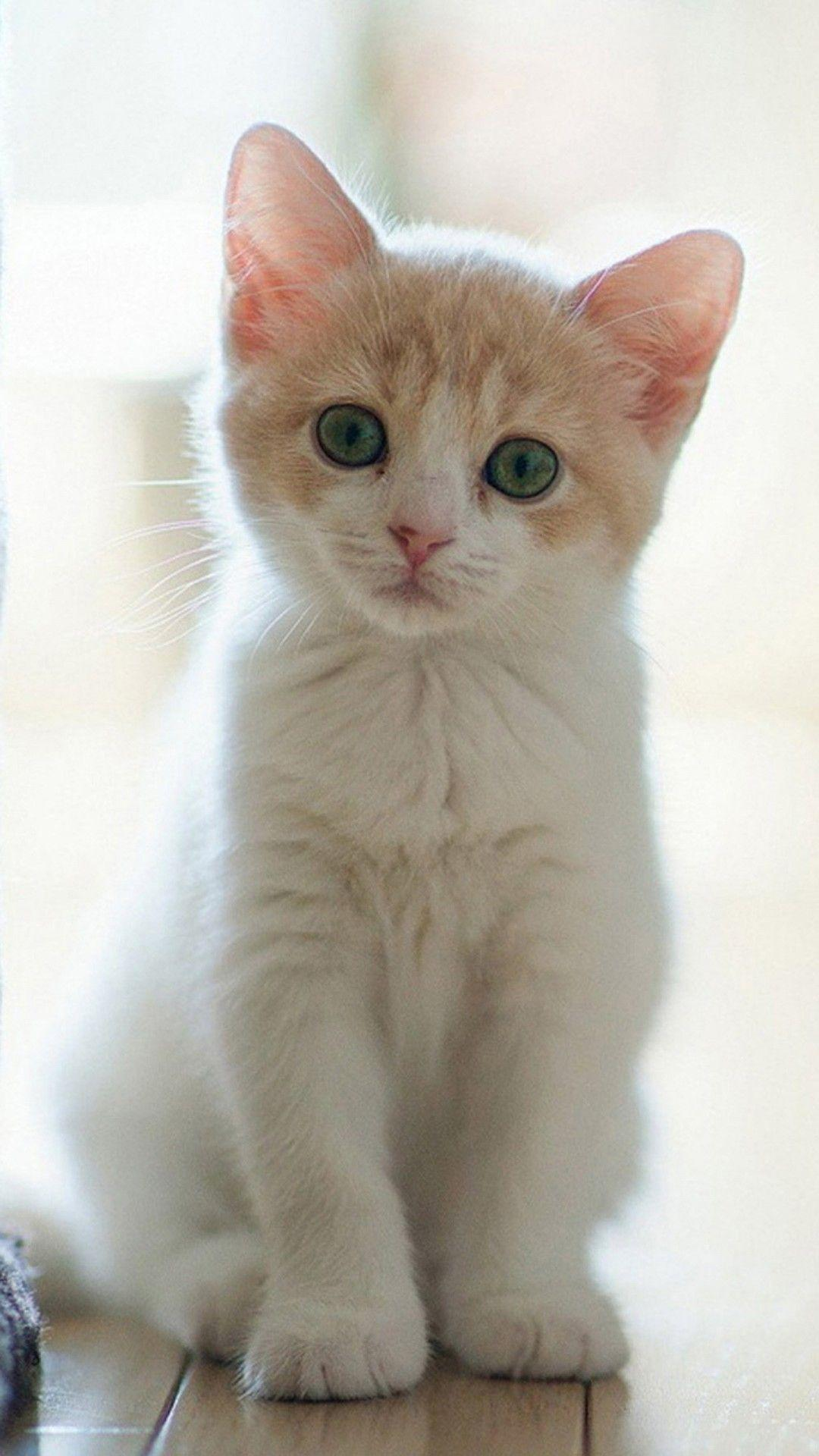 Cute Cat Hd Wallpapers Wallpaper Cave