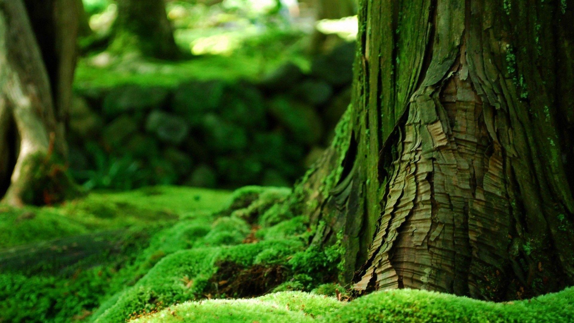 Green Nature Wallpapers Hd Wallpaper Cave