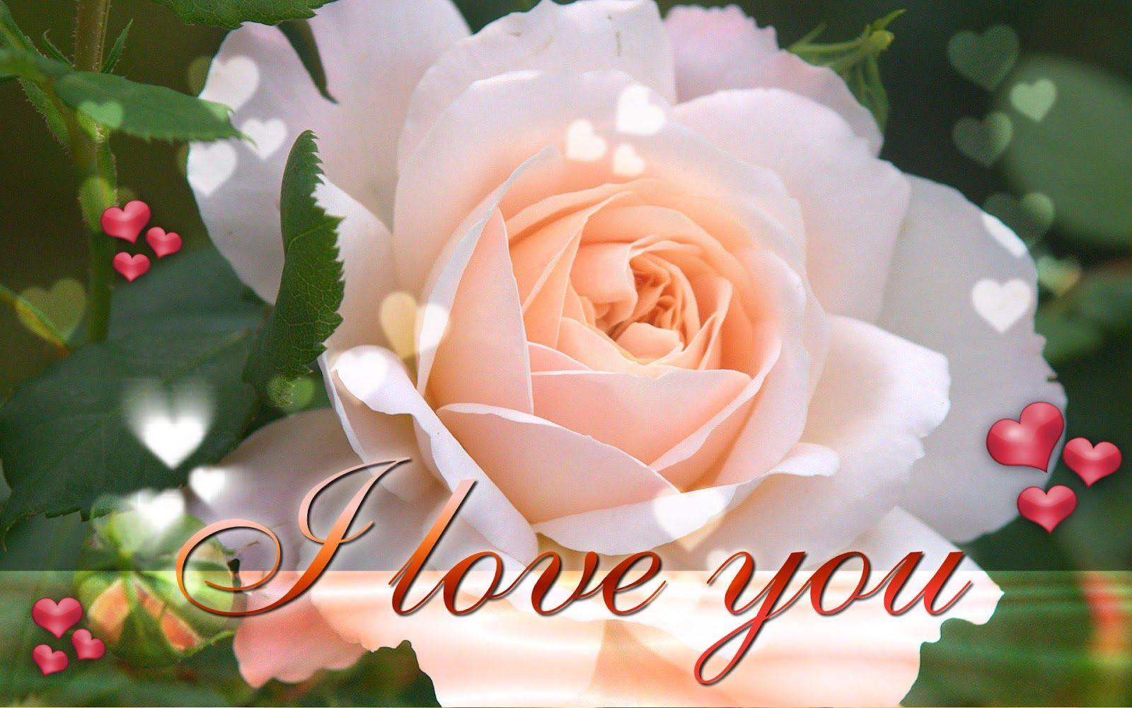 Download I Love You Wallpapers New Hd Image Widescreen Say Afari Of