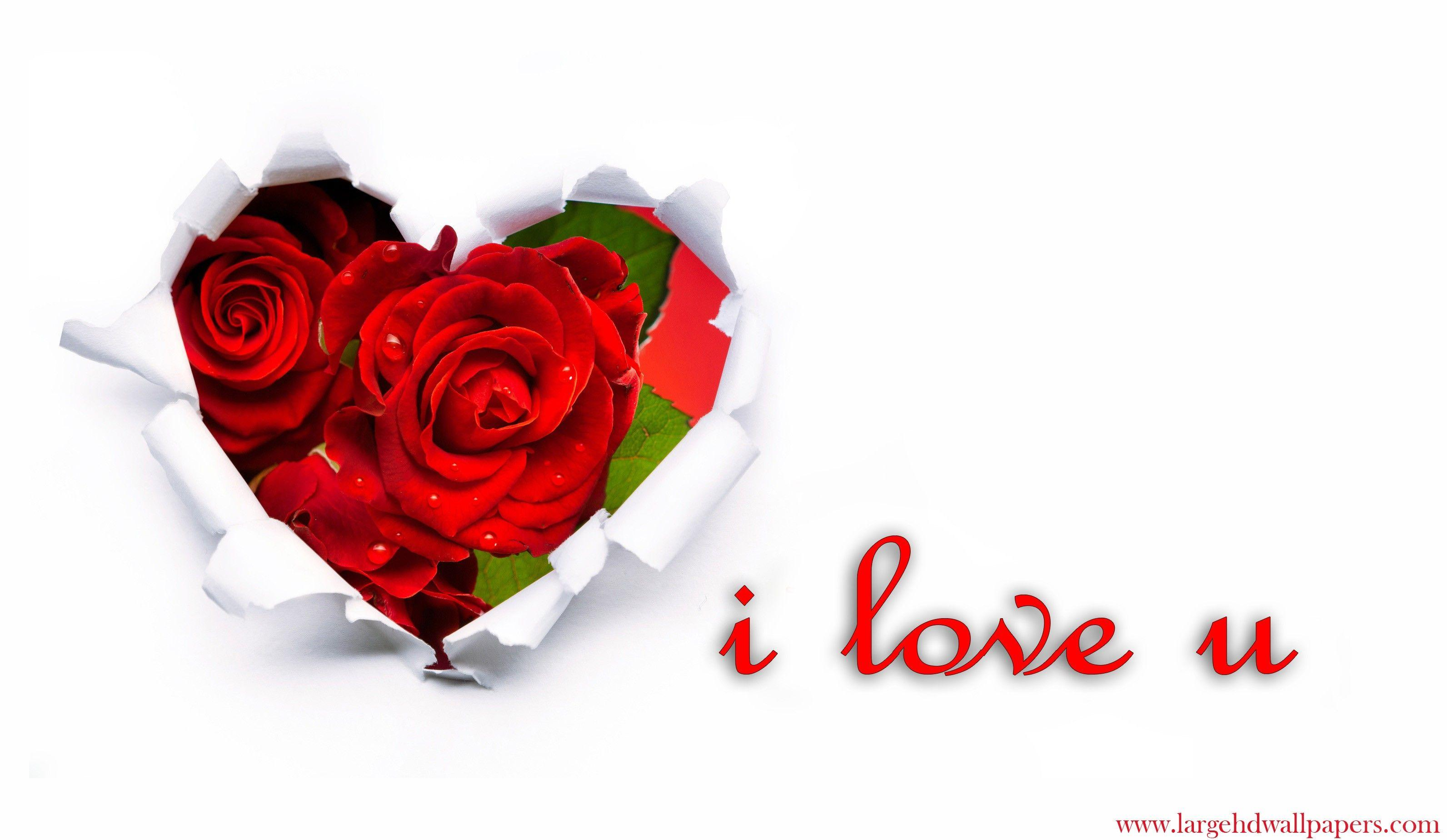 I Love U Rose Hearts Desktop Backgrounds 2016 Wallpapers