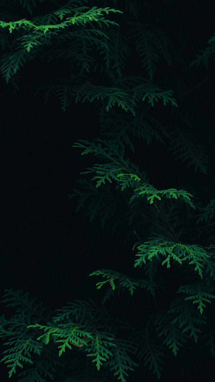 Black Green Nature Hd Iphone Wallpapers Wallpaper Cave